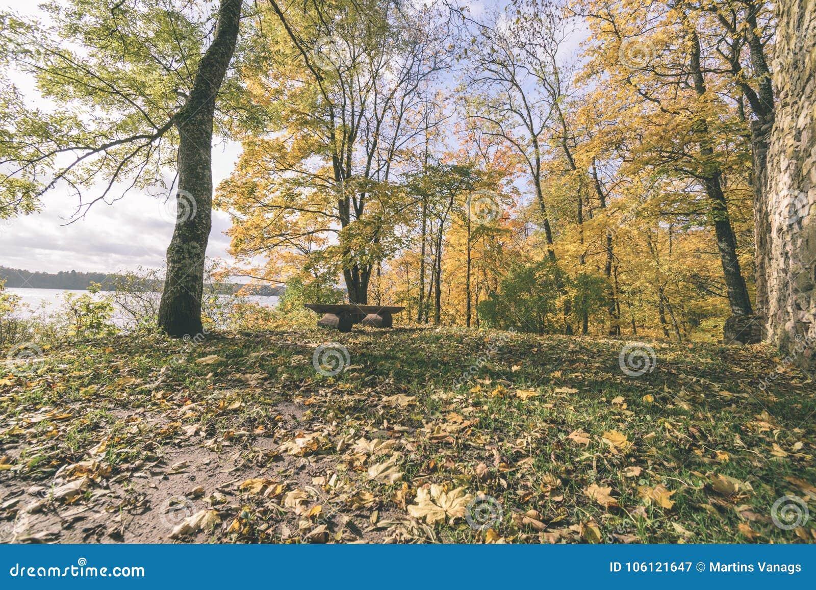 Manhã ensolarada nas madeiras floresta com troncos de árvore - vintage com referência a