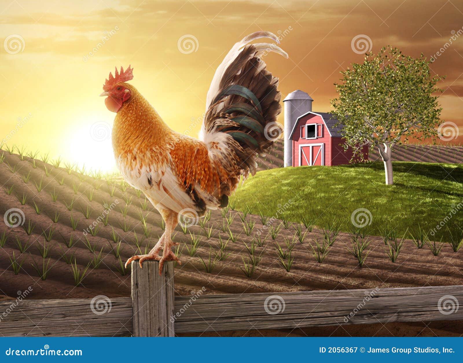 Manhã fresca da exploração agrícola