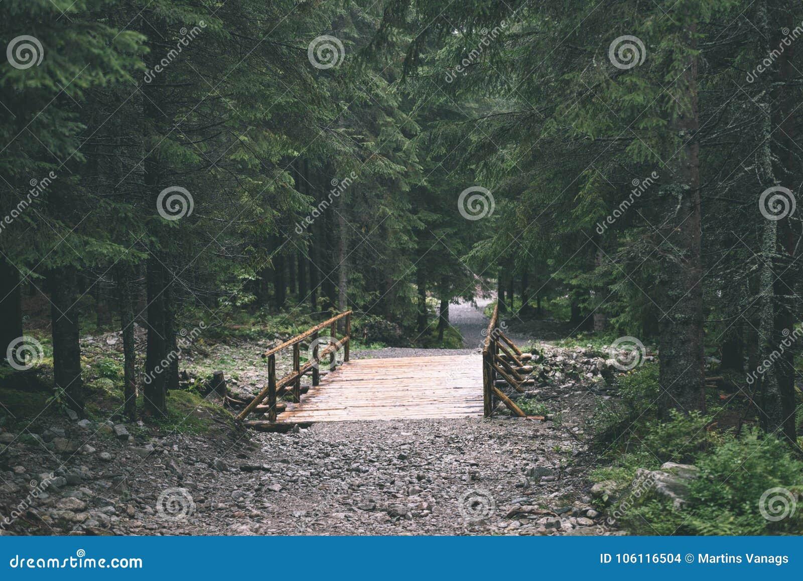 Manhã molhada enevoada nas madeiras floresta com troncos e excursão de árvore