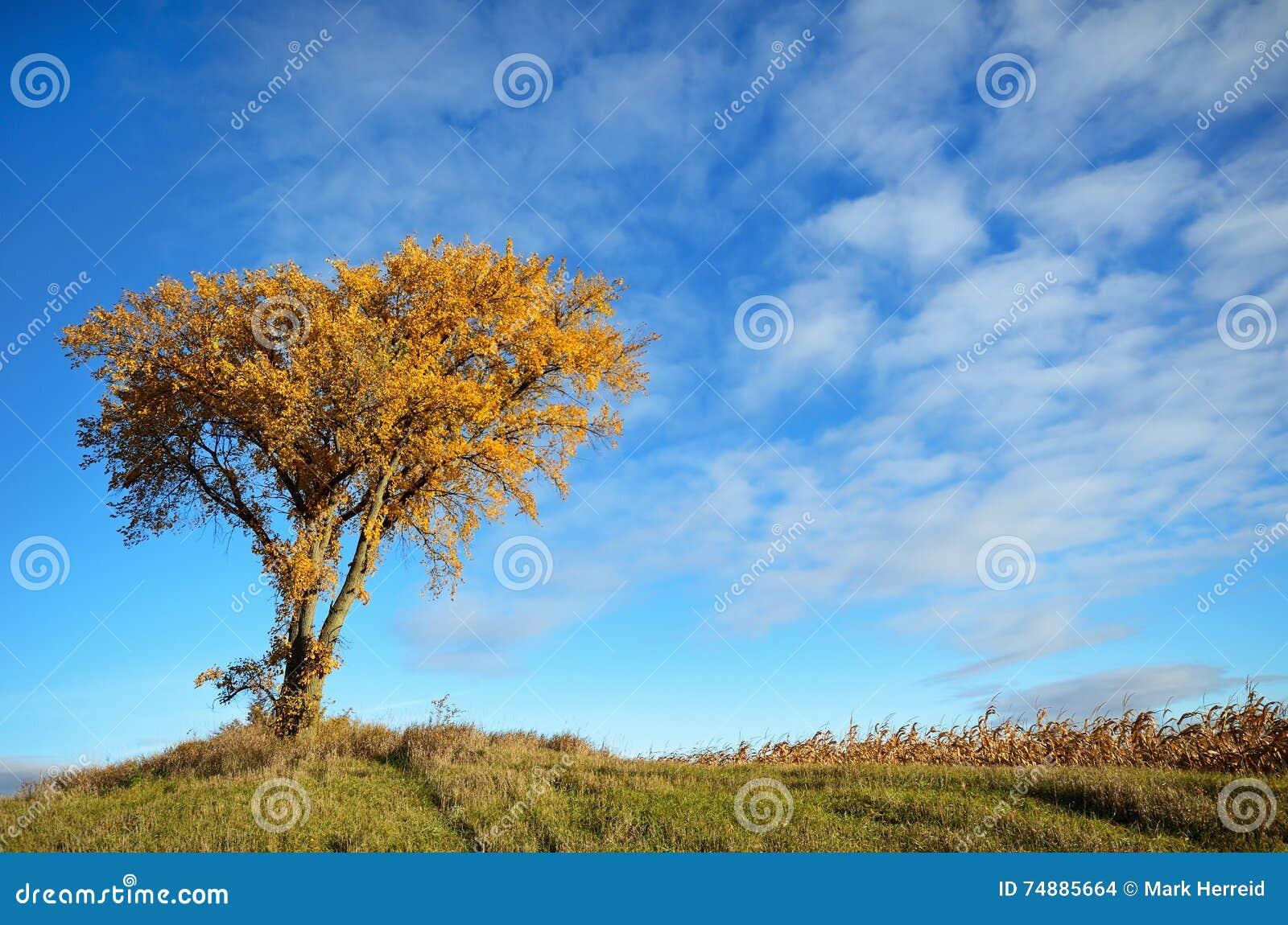 Manhã Sun que brilha em uma árvore na queda
