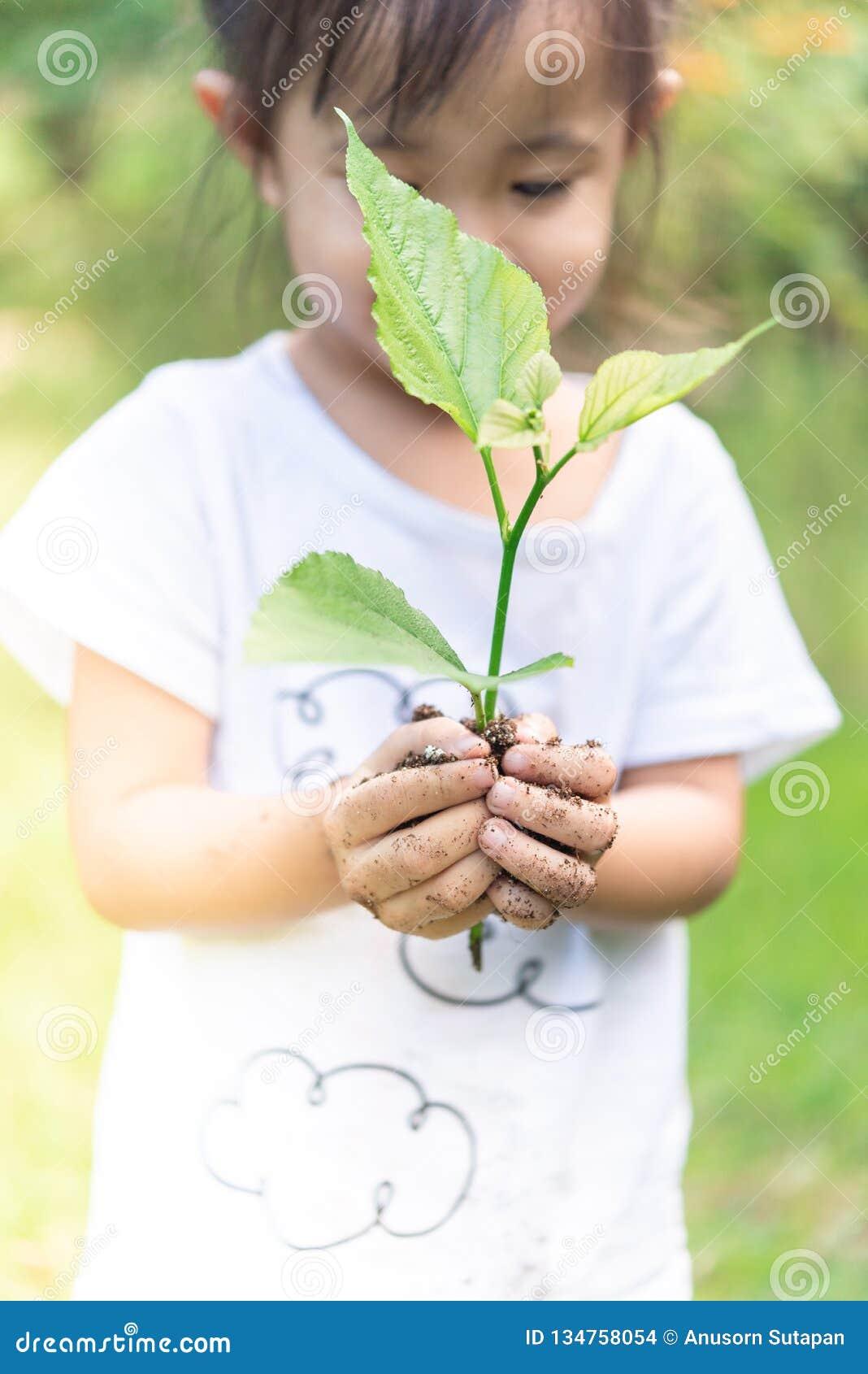 Mani asiatiche della ragazza che tengono piccola pianta per preparare per la piantagione