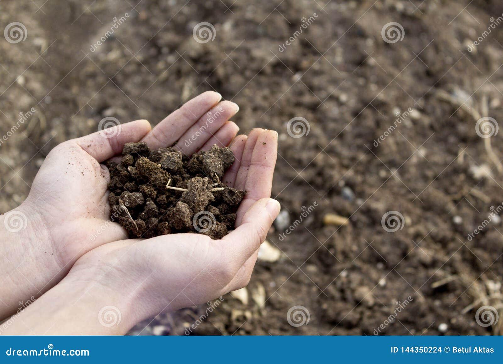 Mani che tengono suolo nel campo agricolo