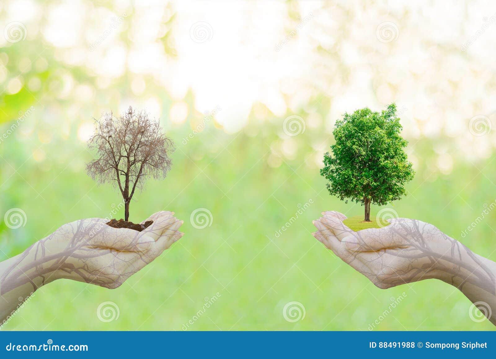 Mani umane di idea di concetto di ecologia di doppia esposizione che tengono la grande città dell albero della pianta