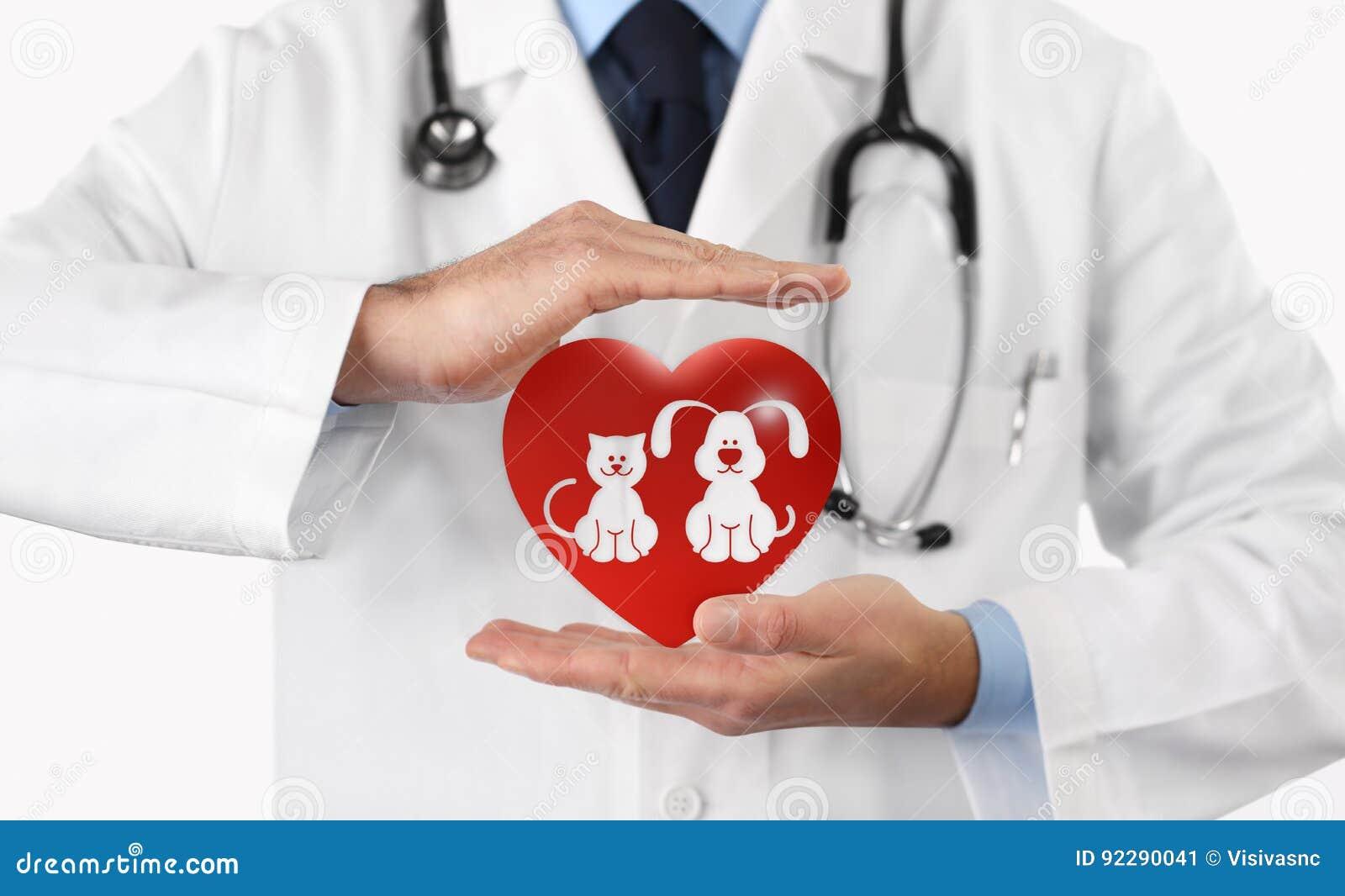 Mani veterinarie di concetto di cura di animale domestico con le icone del cuore e dell animale