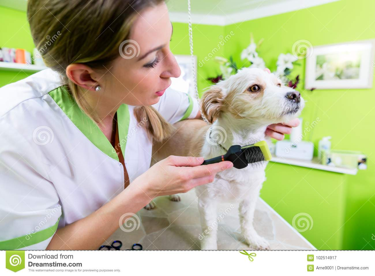 Manicure For Dog In Pet Grooming Salon Stock Image Image Of