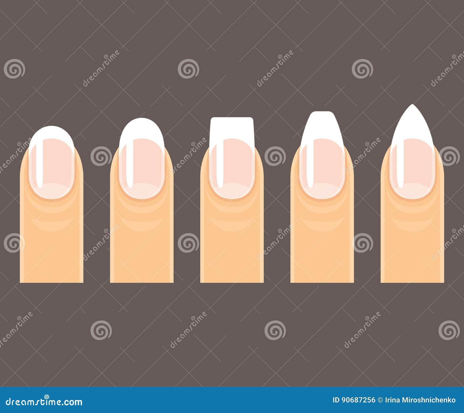 Manicure nail shapes stock vector. Illustration of nail - 90687256