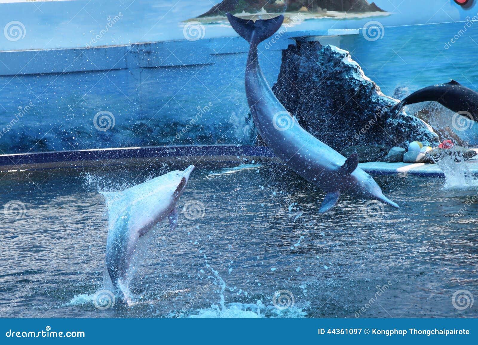 Manifestazione del delfino