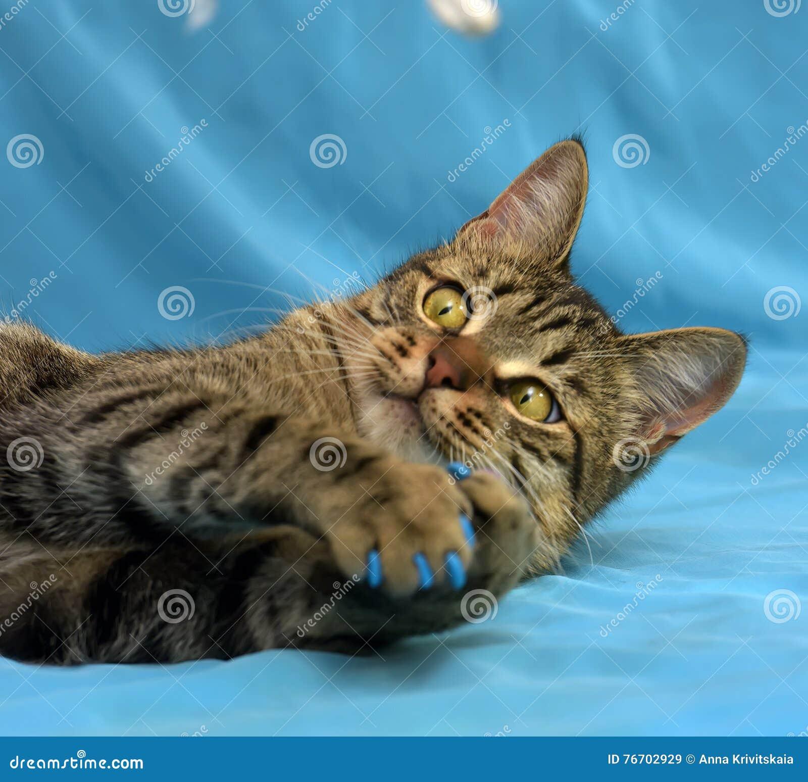 Manikyr för katter