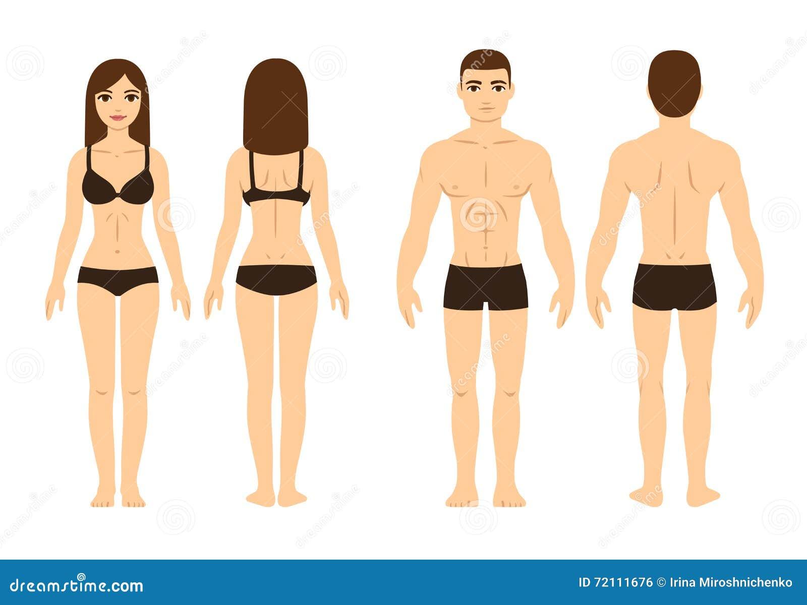 Manlig och kvinnlig kropp