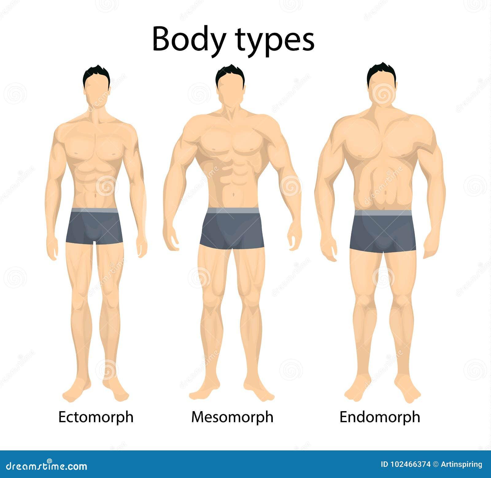 Manliga kroppstyper