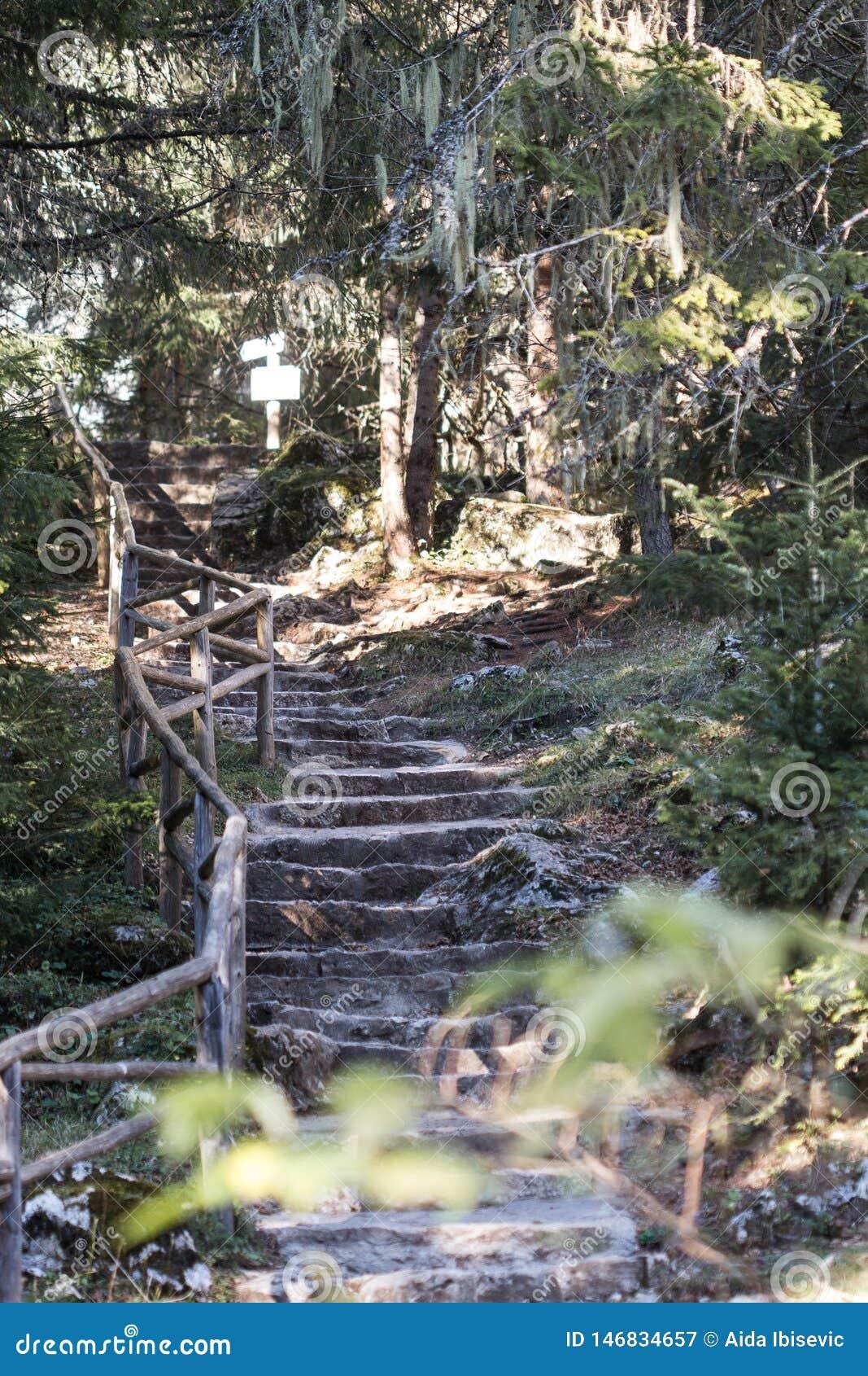 Manmade Kamienni schodki w lesie