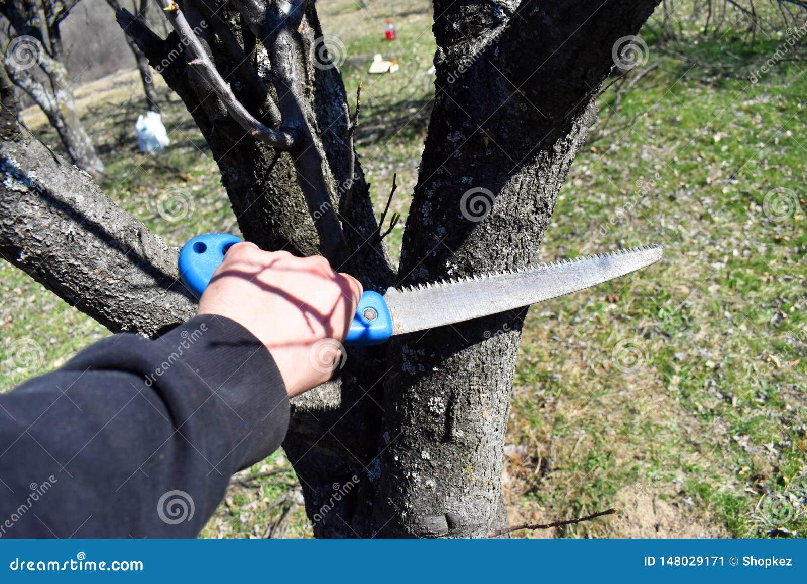 Mann, der Baumast mit dem Handsaw schneidet