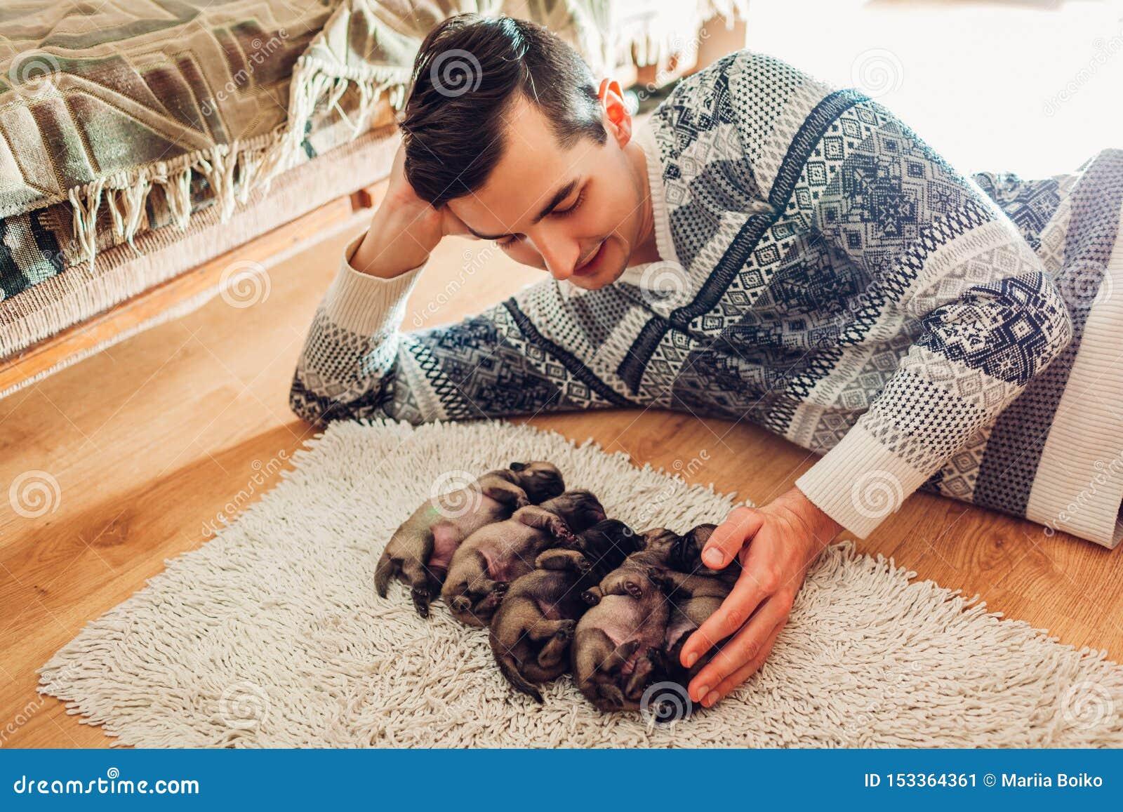 Mann, der f?nf Pughundewelpen zu Hause schlafen auf Teppich z?hlt Wenig Welpen, die zusammen auf ihren R?ckseiten liegen