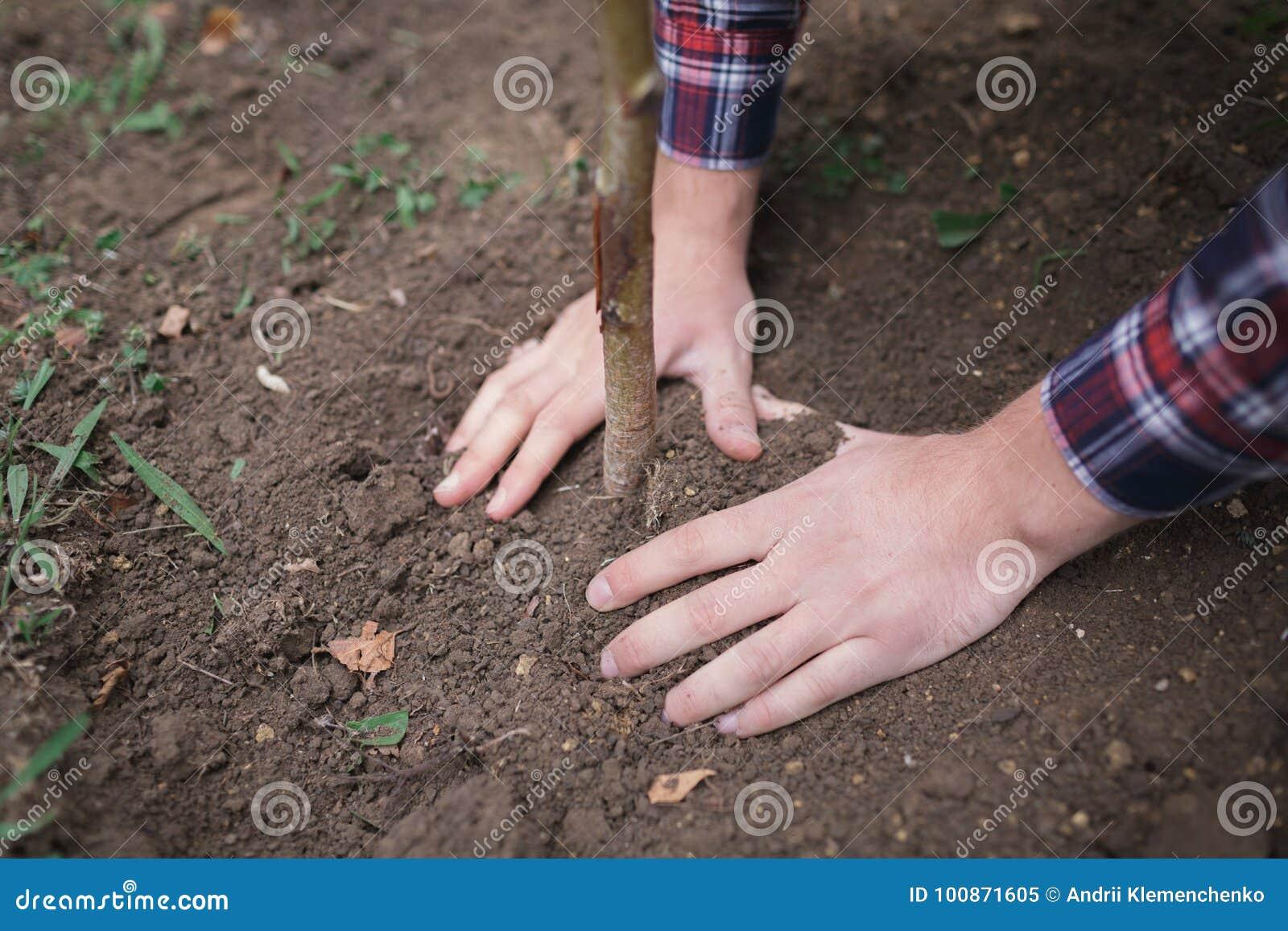 Mann hat einen jungen Baum und eine Sorgfalt über ihn beim Arbeiten im Garten gepflanzt Tag der Erde, Erdschutz