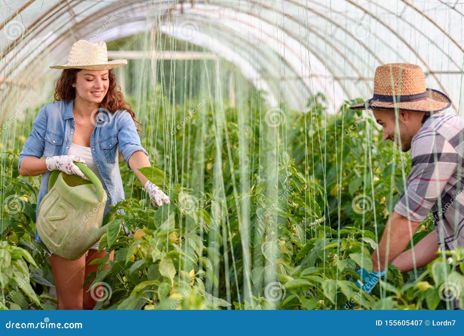 Mann und Frau, die organisches Gemüse am Gewächshaus wachsen