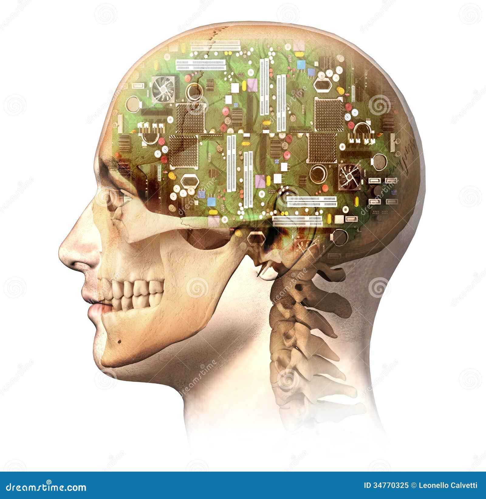 Mannelijk menselijk hoofd met schedel en kunstmatige elektronische kringsbustehouder