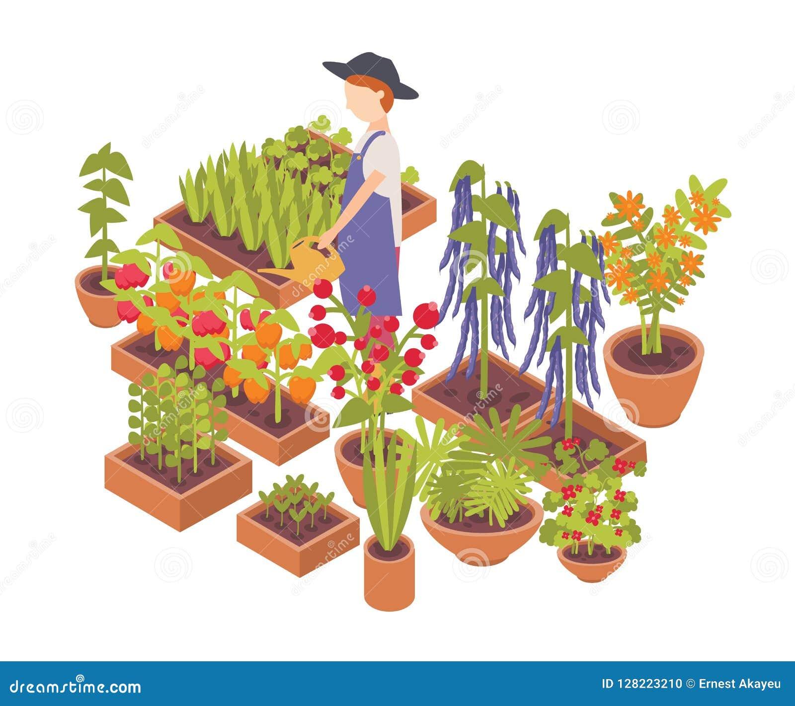 Mannelijke landbouwer het water geven groenten en bloemen die die planters kweken op witte achtergrond worden geïsoleerd Eco de v