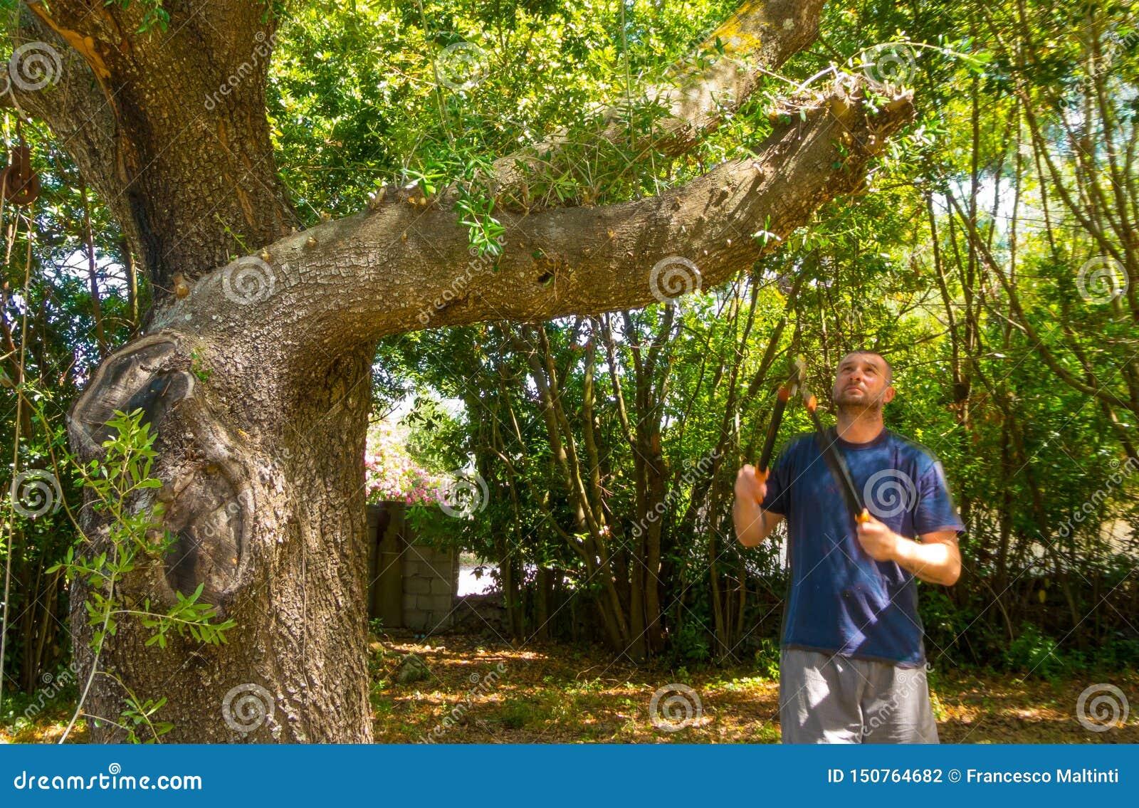 Mannen använder saxen i en trädgård