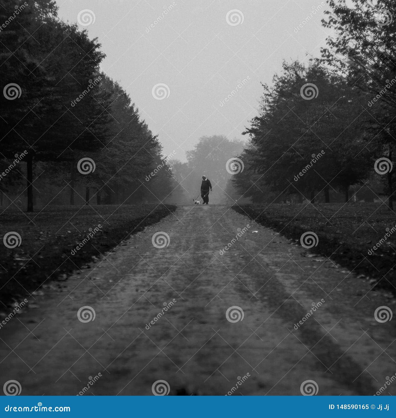 Mannen med hans ta för hund går runt om Kensngton trädgårdar i en dimmig dag