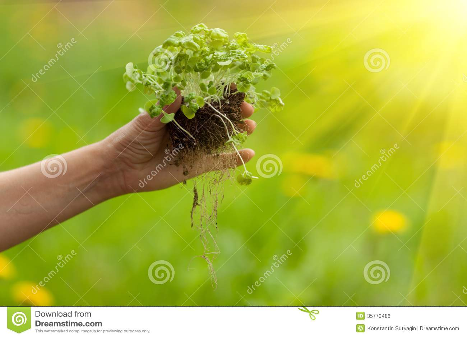 Mano che pianta pianta