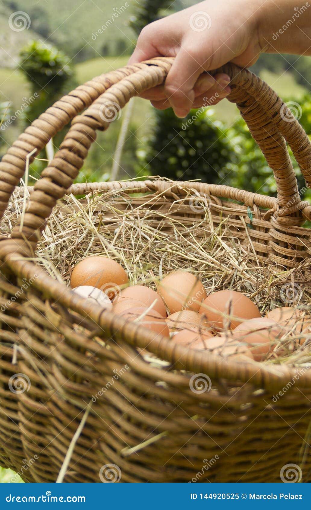 Mano con el bascket del backsground verde de los huevos frescos