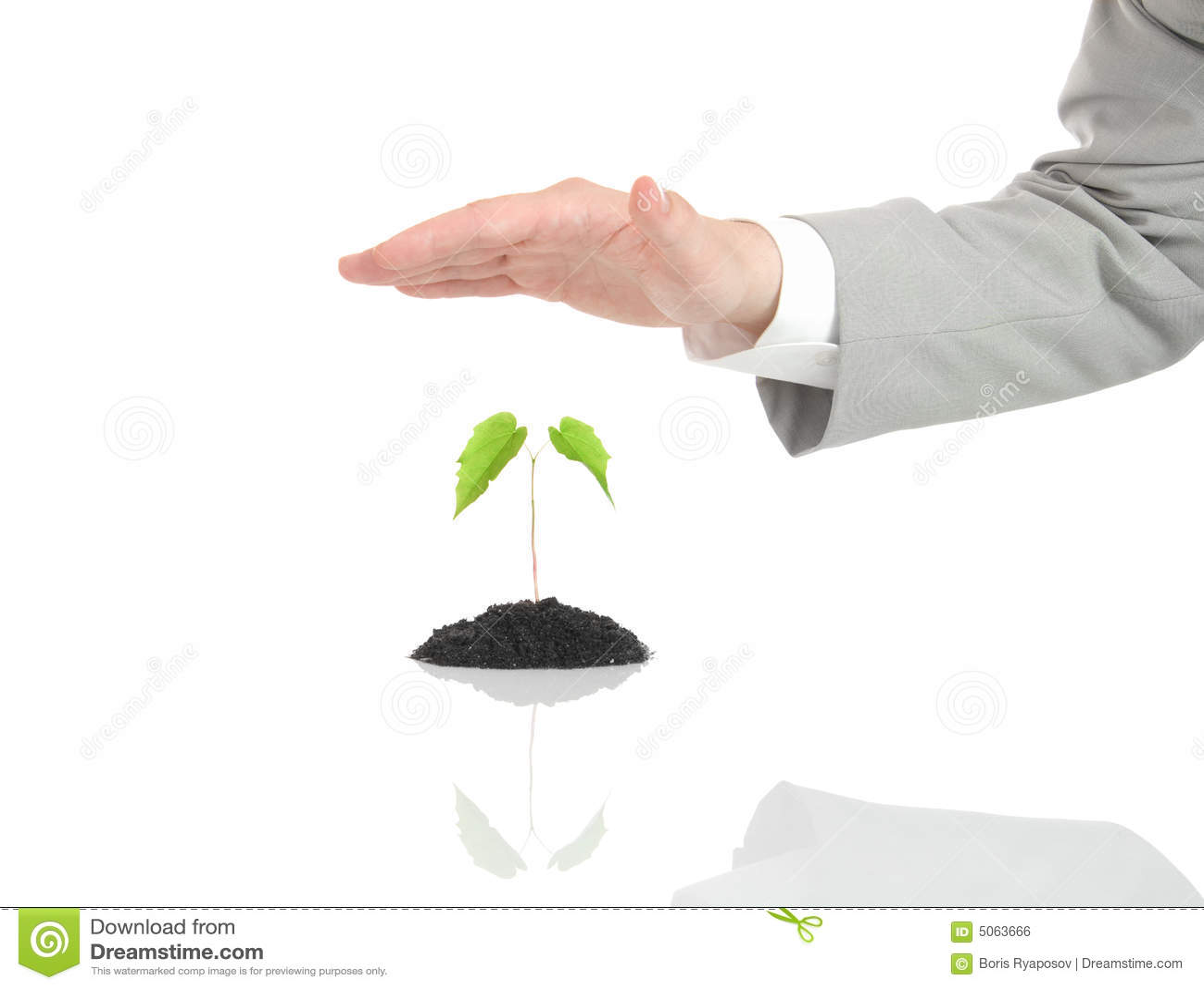 Mano dell uomo d affari che protegge pianta verde isolata