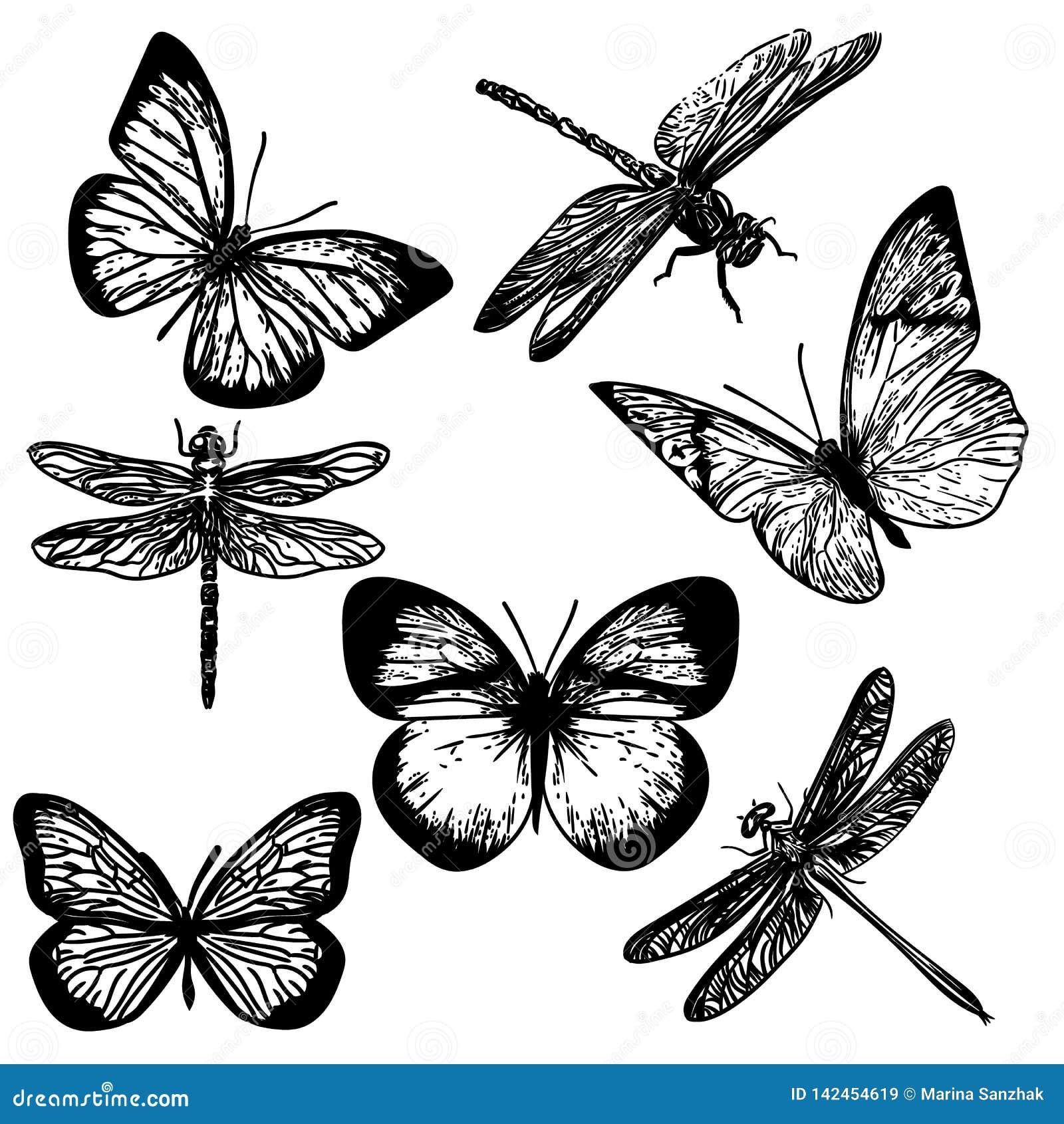 Mano dibujada de insectos