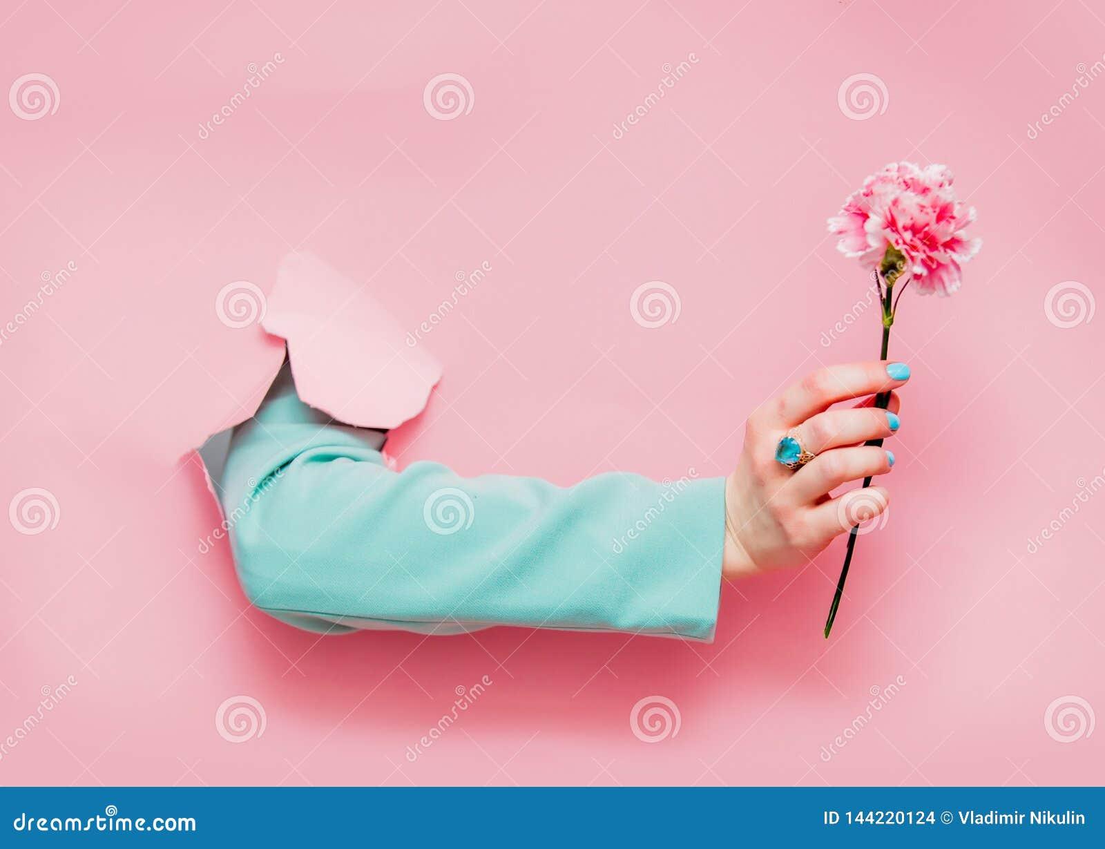 Mano femenina en chaqueta azul clásica con la flor del clavel