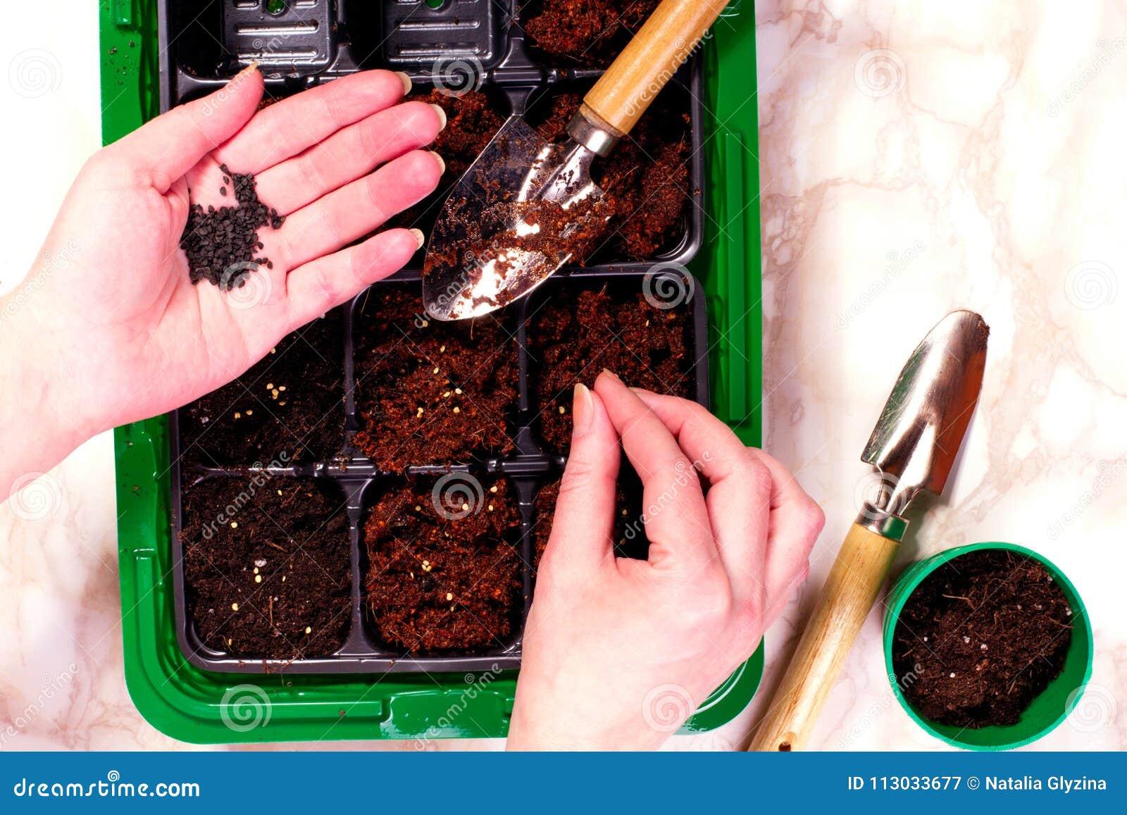 Mano femenina que planta la semilla en suelo