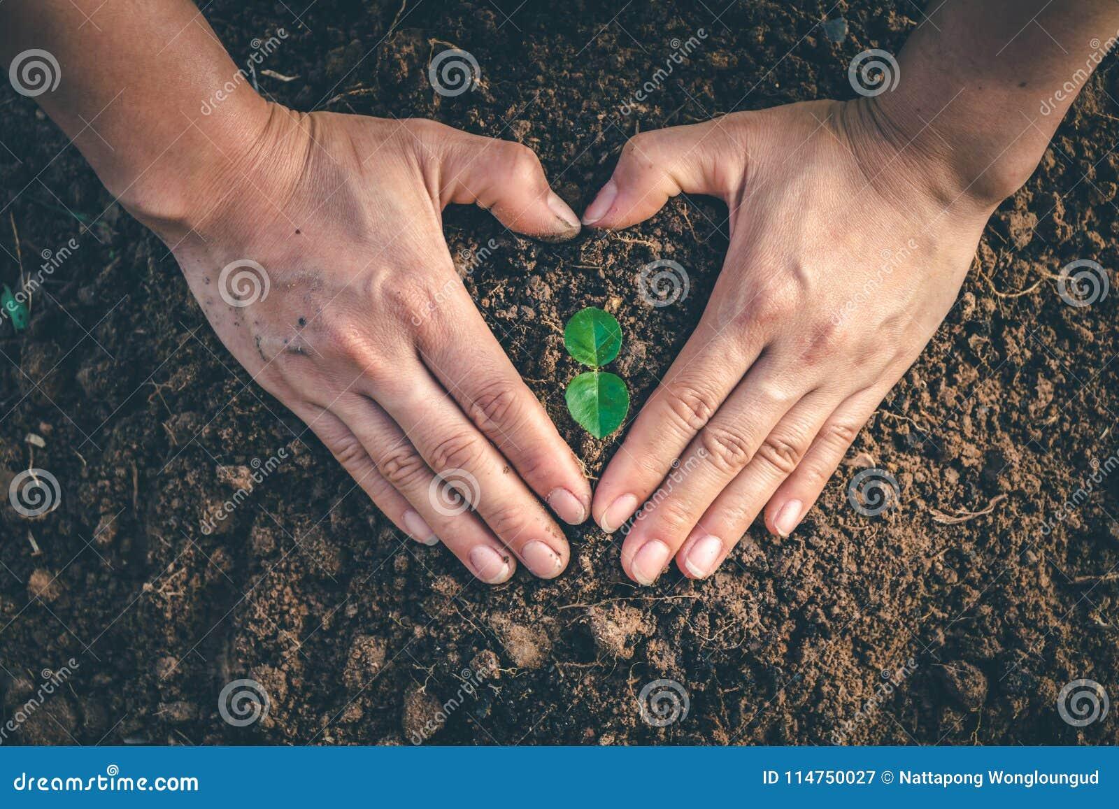 Mano per la piantatura degli alberi di nuovo alla foresta