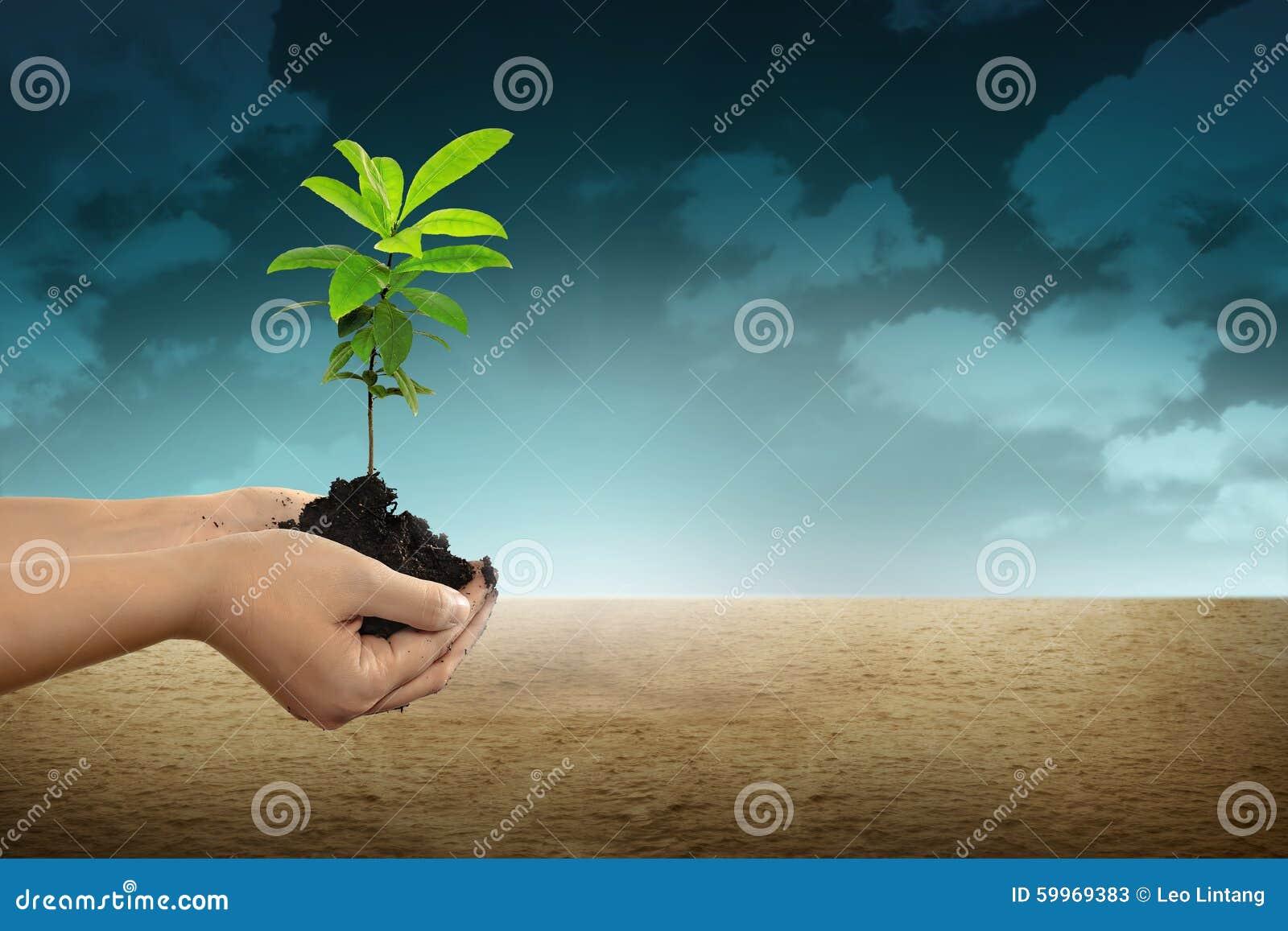 Mano que sostiene una planta verde