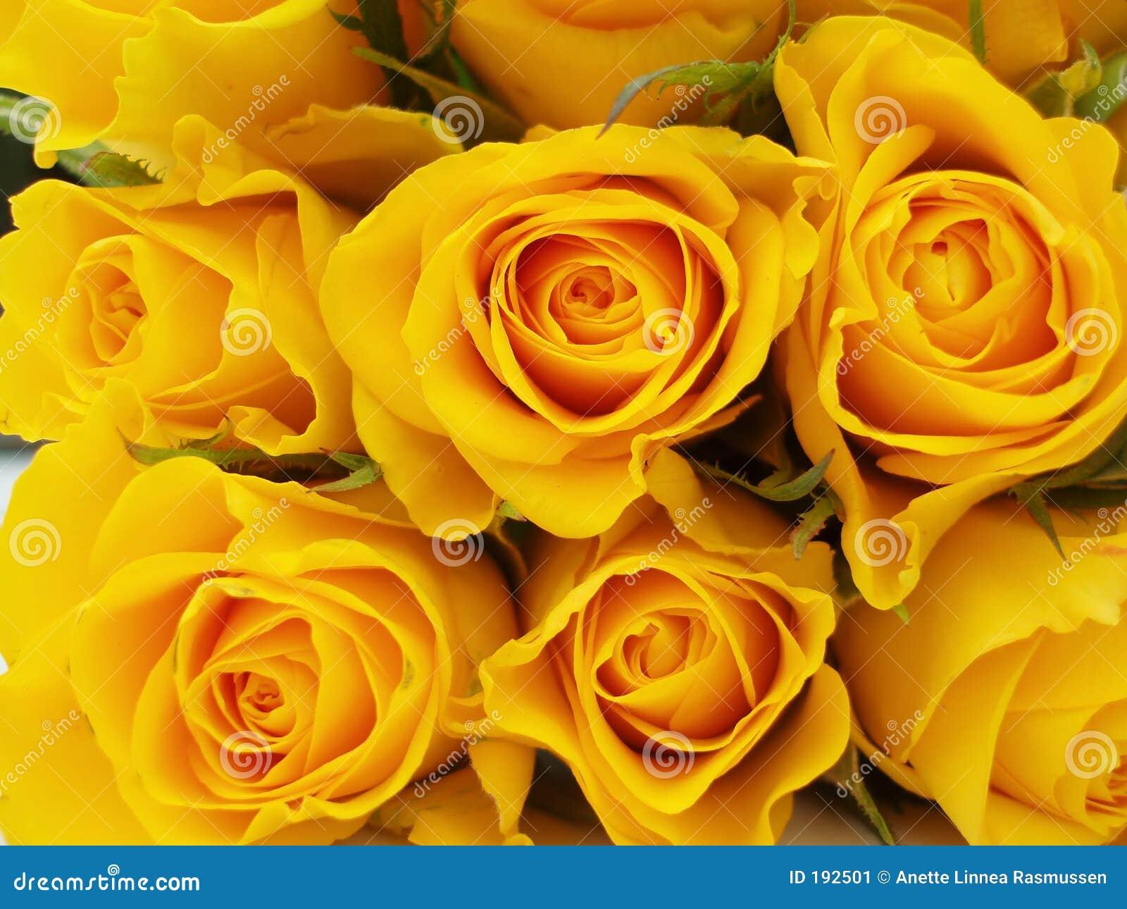Manojo de rosas amarillas