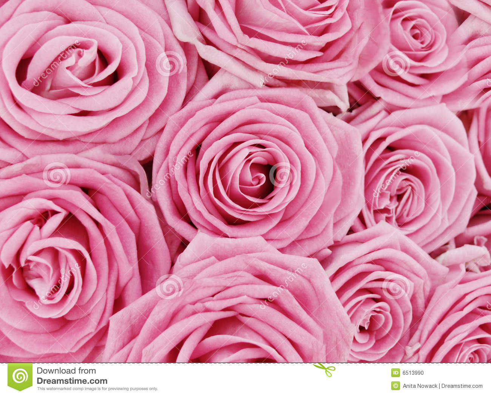 Manojo De Rosas Rosadas Foto De Archivo Imagen De Detalle 6513990