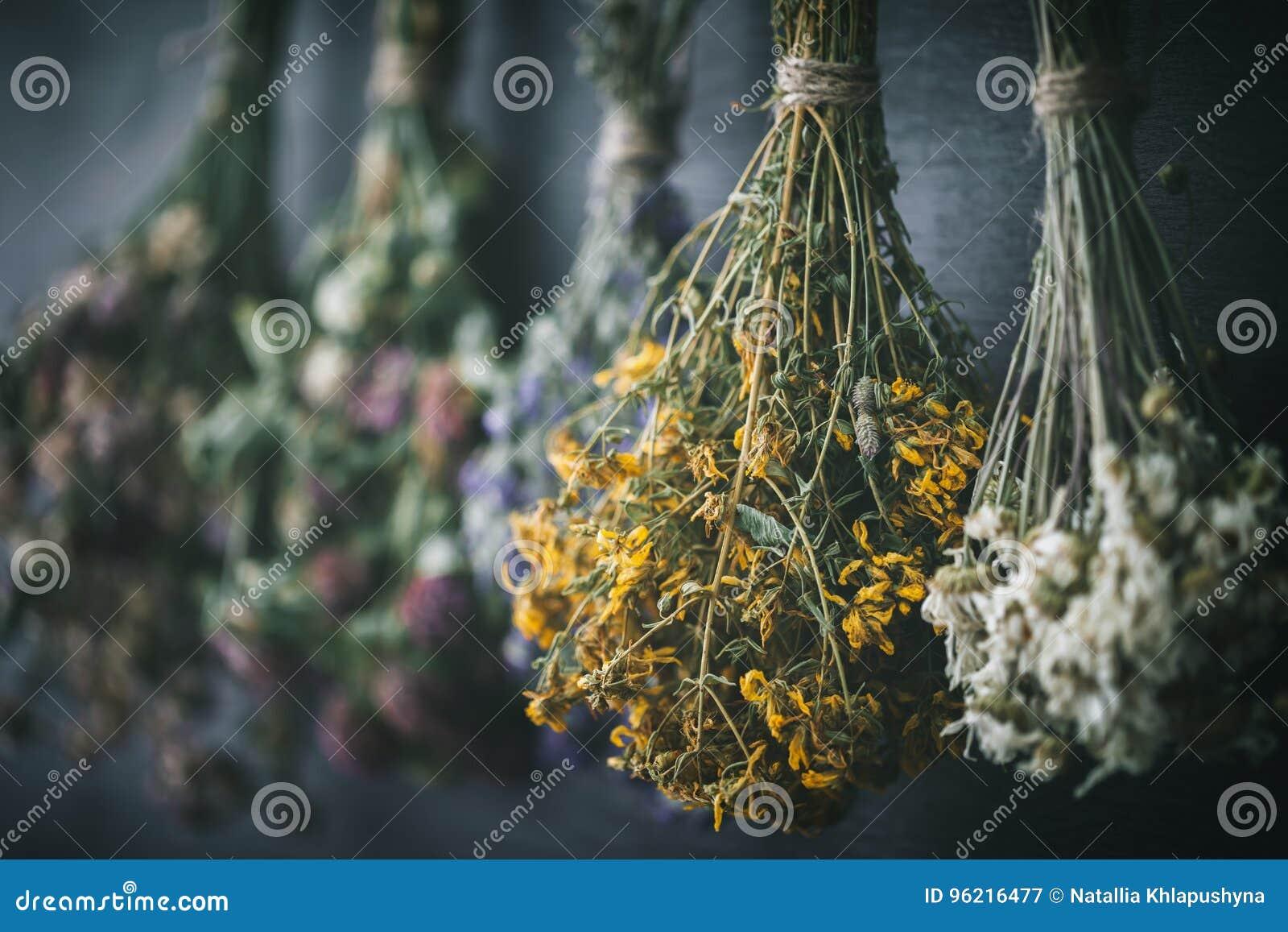 Manojos de la ejecución de las hierbas medicinales, foco en la flor del hypericum