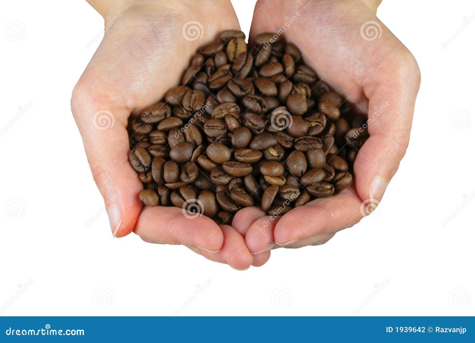 Manos con los granos de café