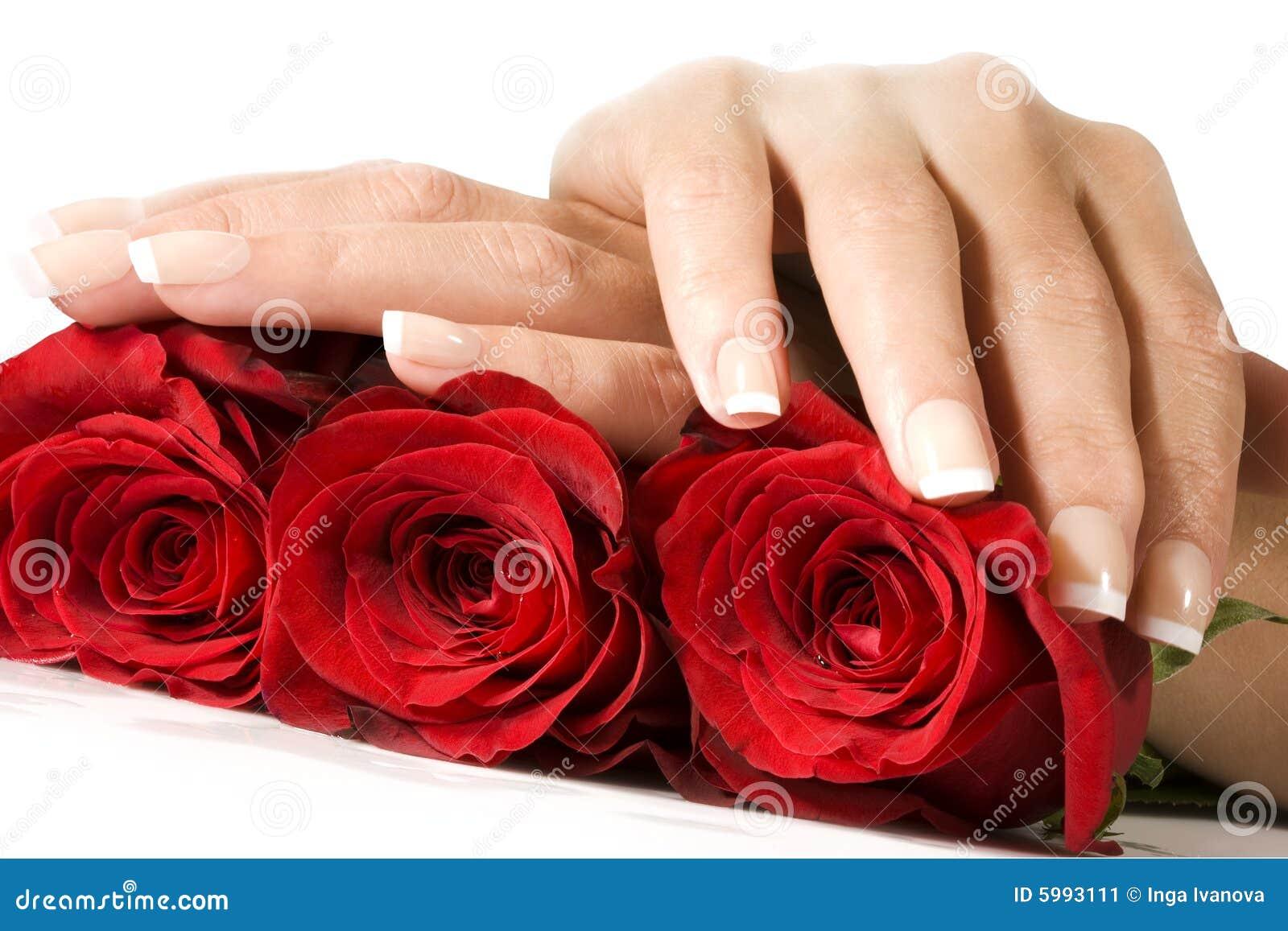 Manos De La Mujer Con Las Rosas Rojas Imagen de archivo - Imagen ... Rose