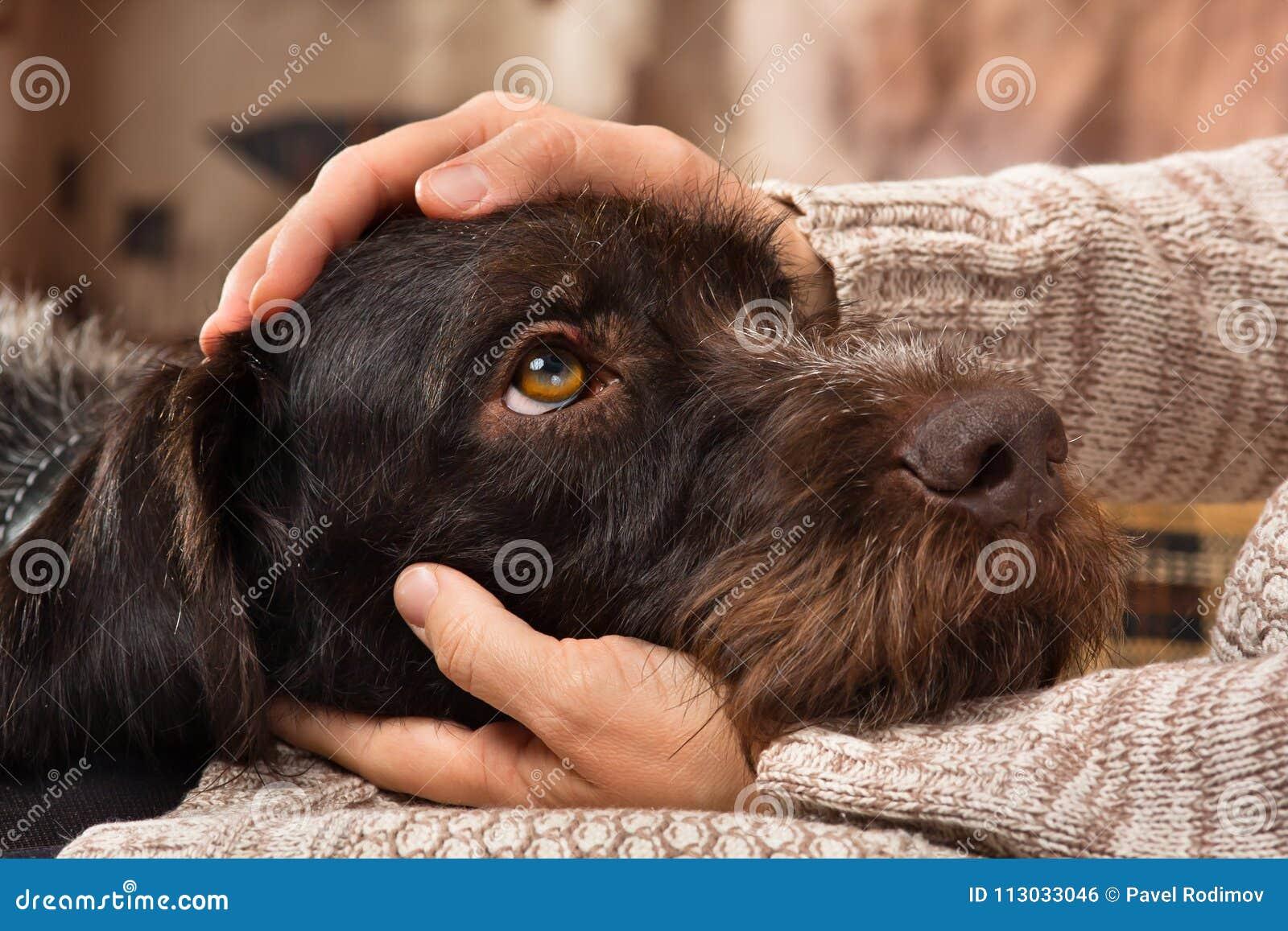 Manos del dueño que acarician un perro