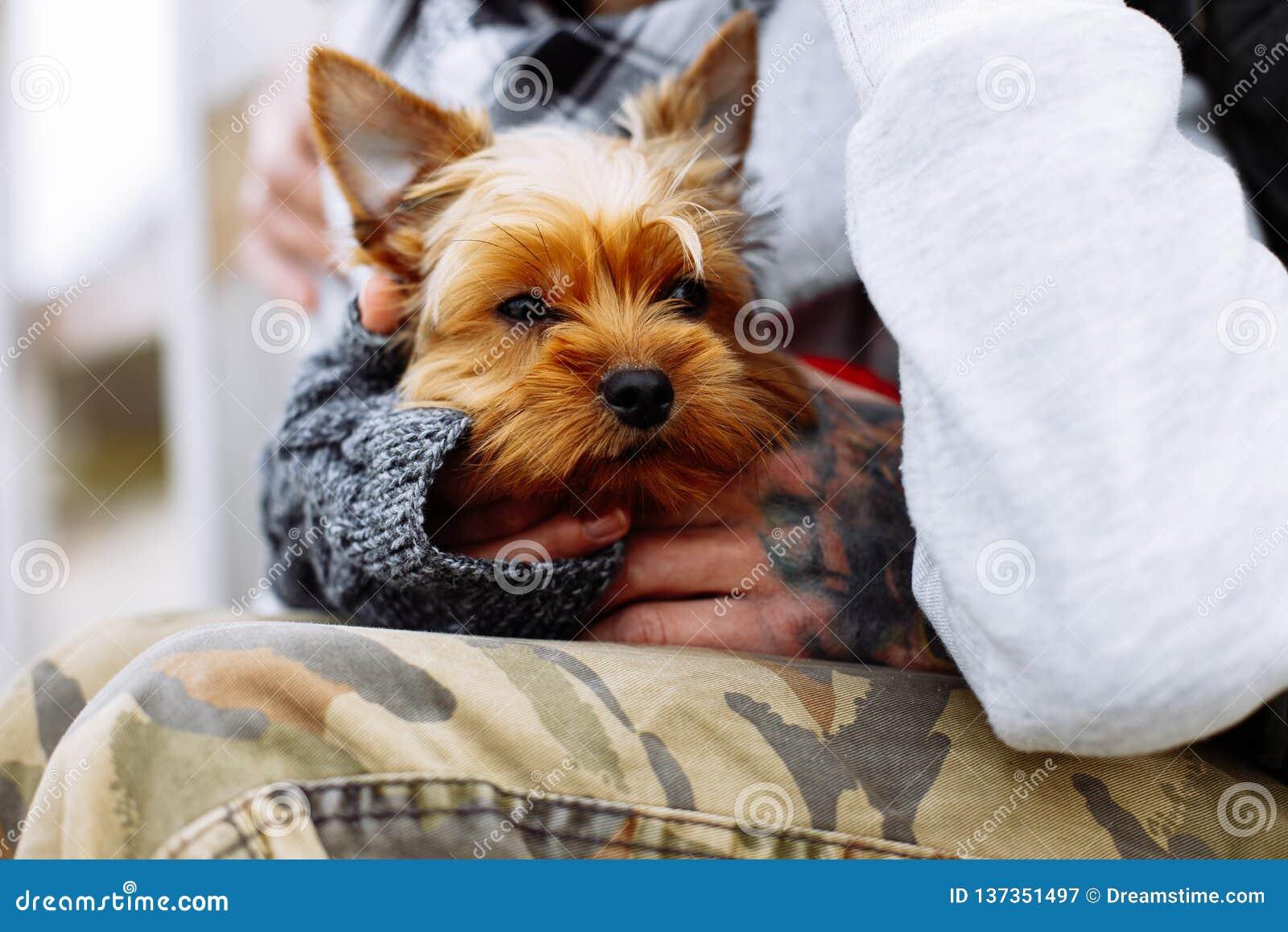 Manos del hombre que sostienen el perro
