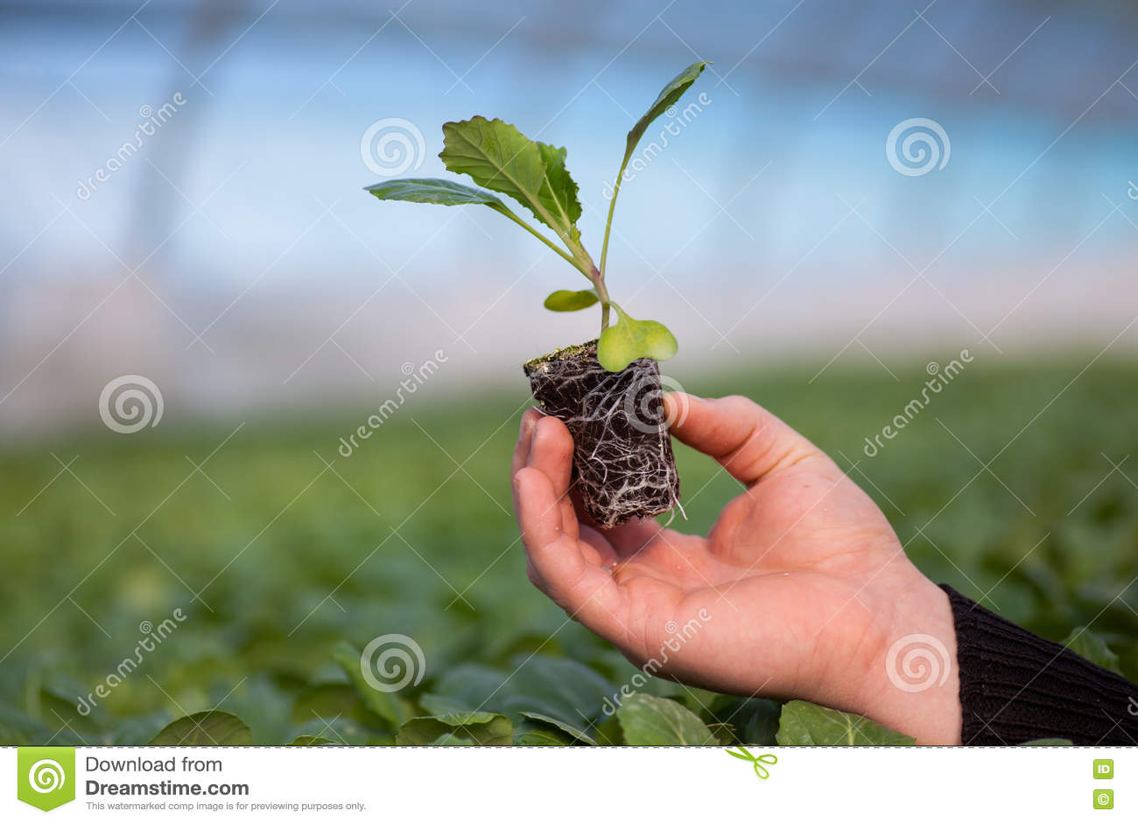 Manos humanas que sostienen la plántula con el suelo sobre fondo borroso de la naturaleza El almácigo del CSR del día del ambient