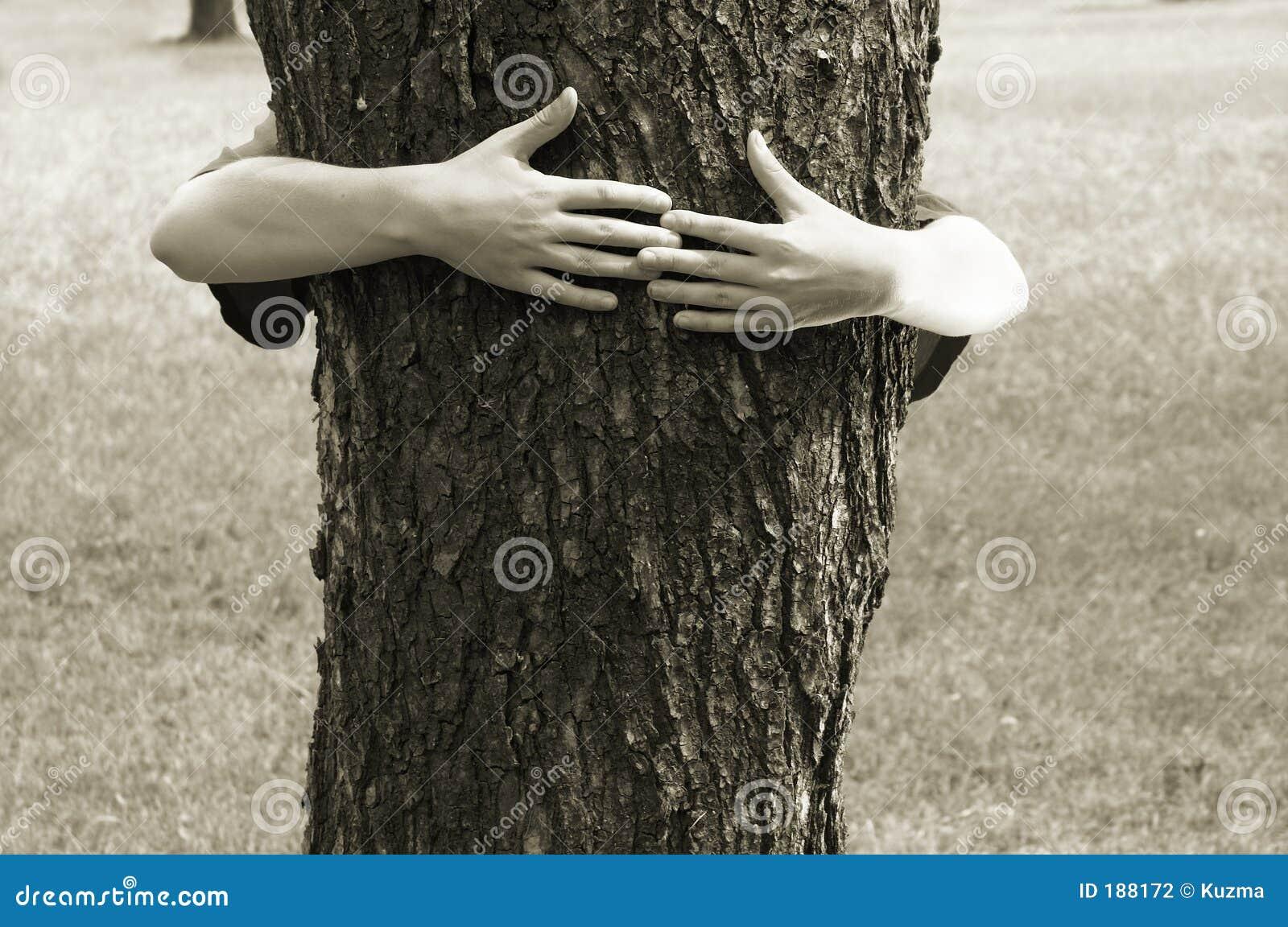 Manos que abrochan el árbol