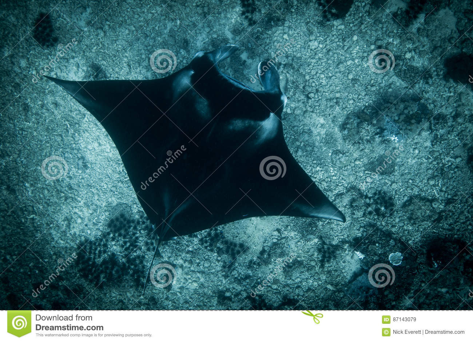 A Manta Ray at manta point