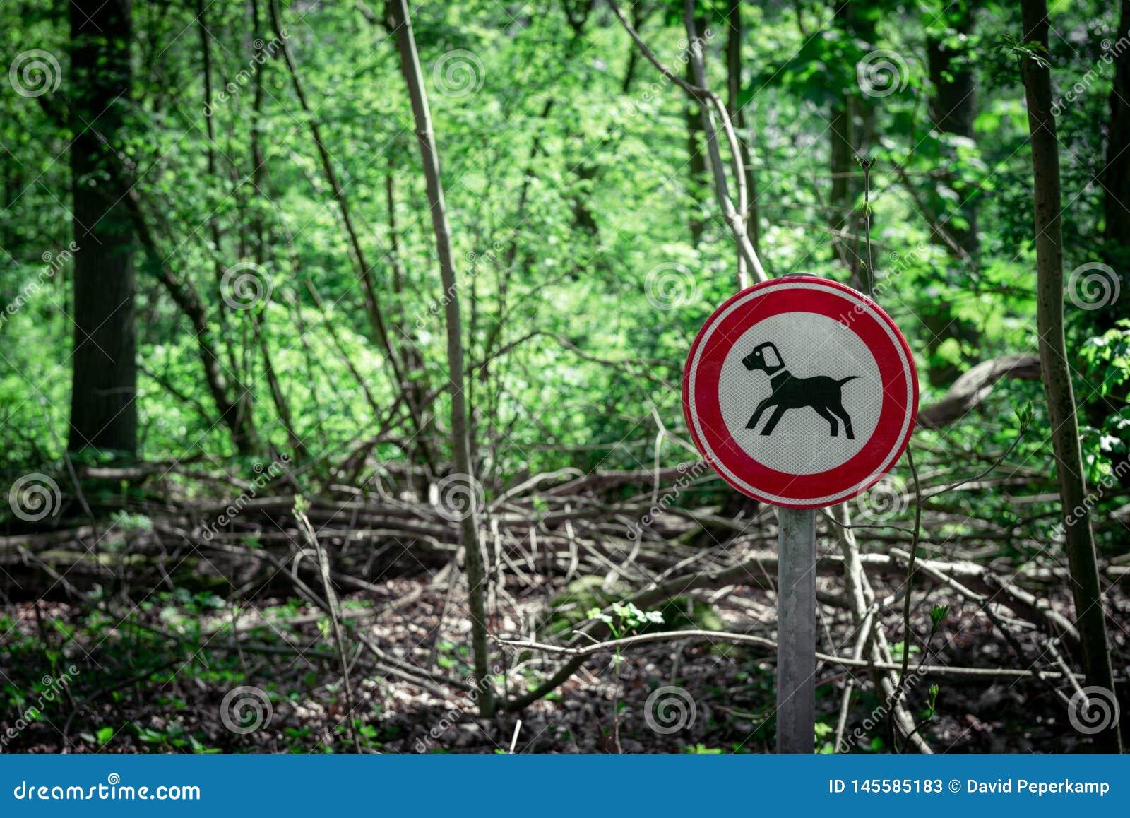 Mantenha seu sinal leashed cão