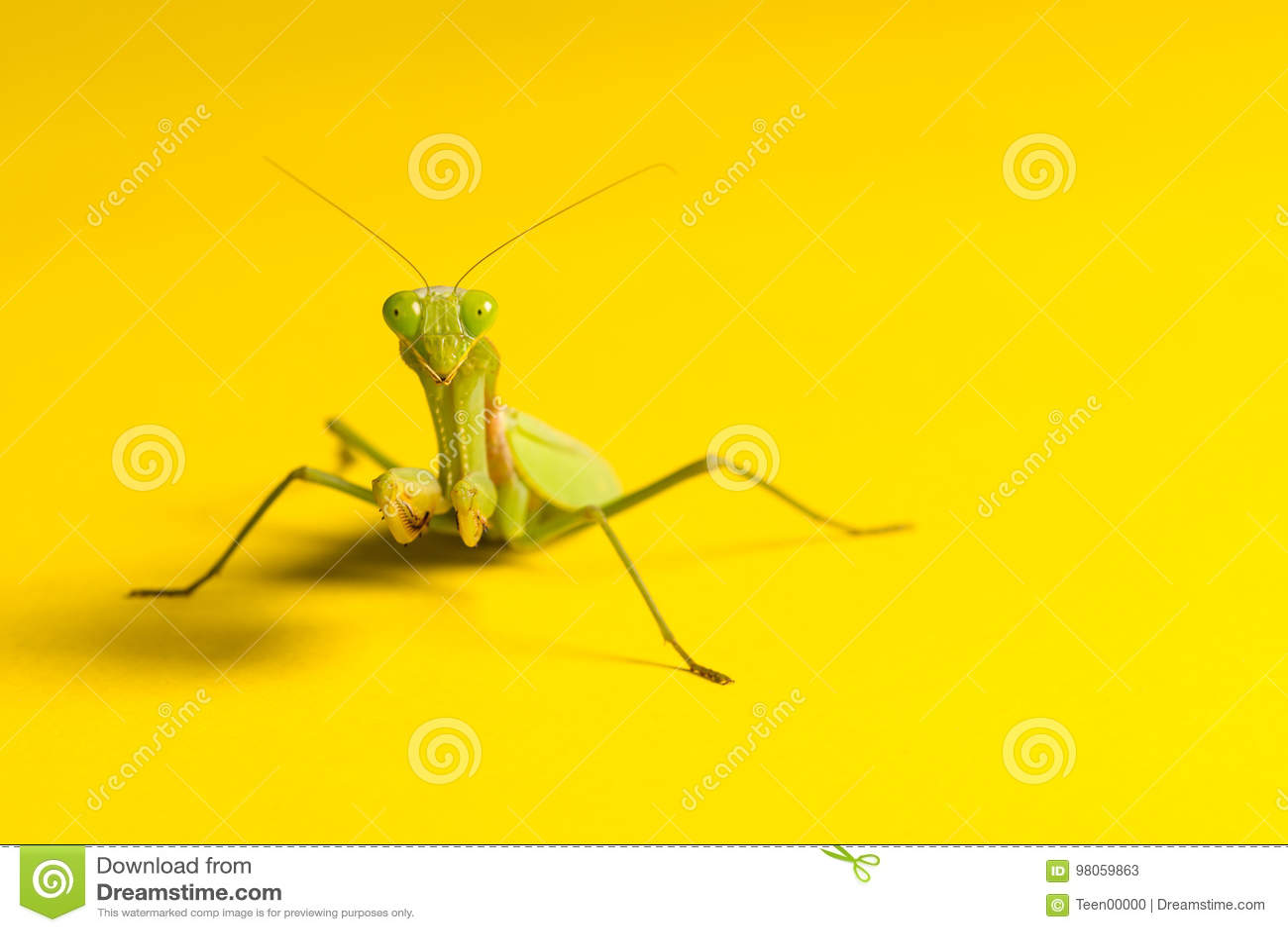 Mantis στο κίτρινο υπόβαθρο