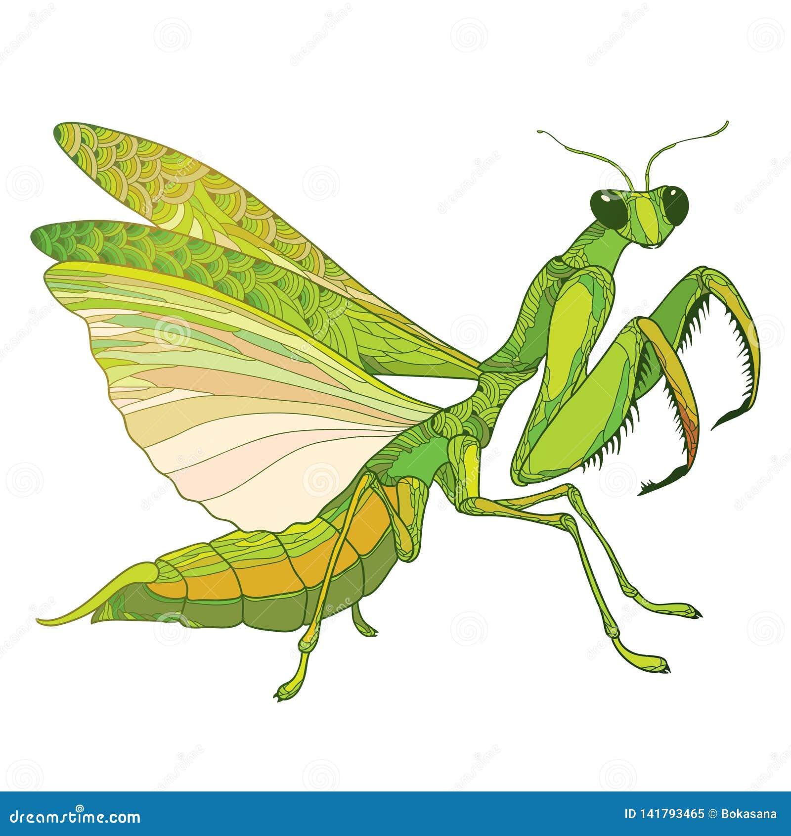 praying mantis wings out