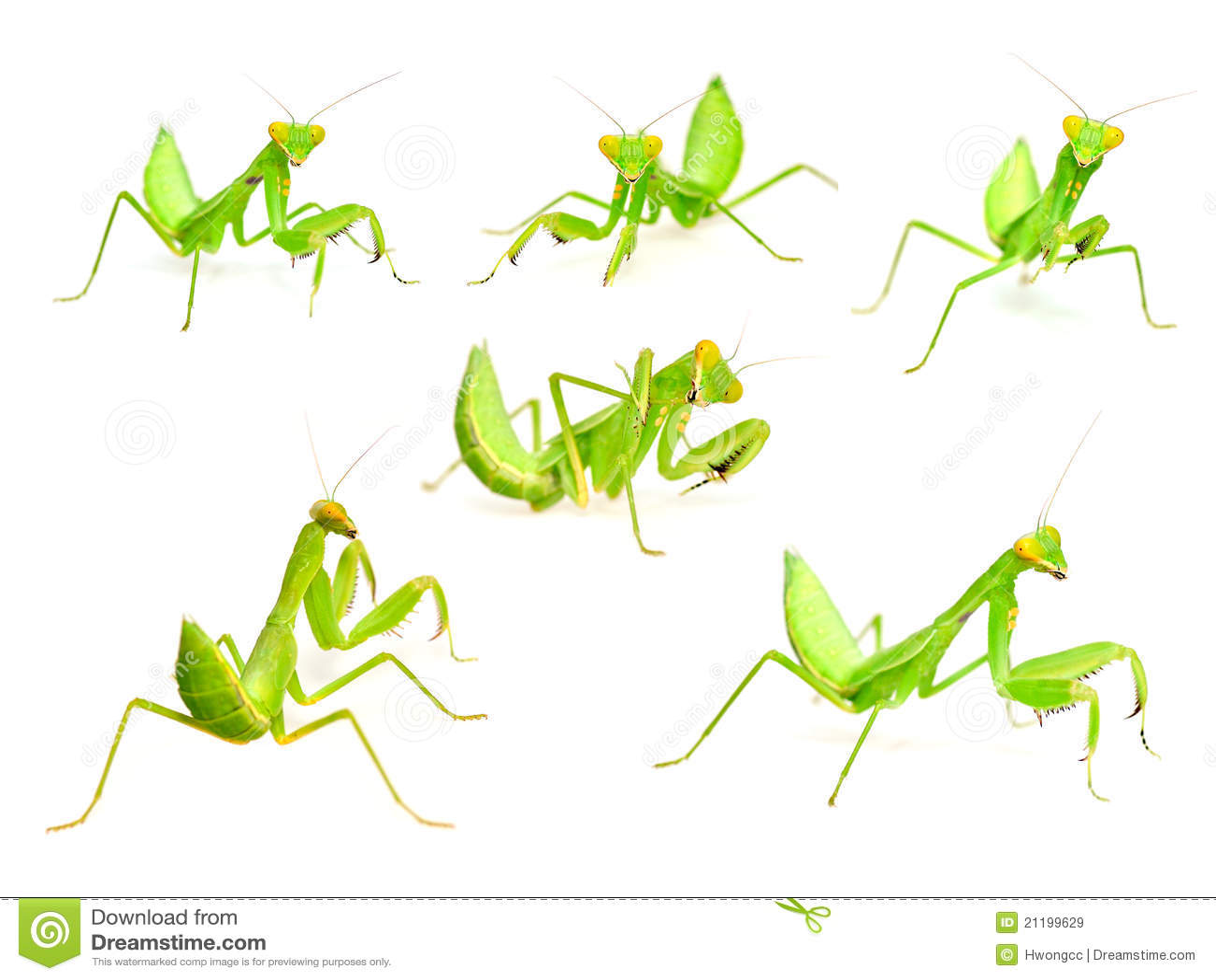 Mantis set
