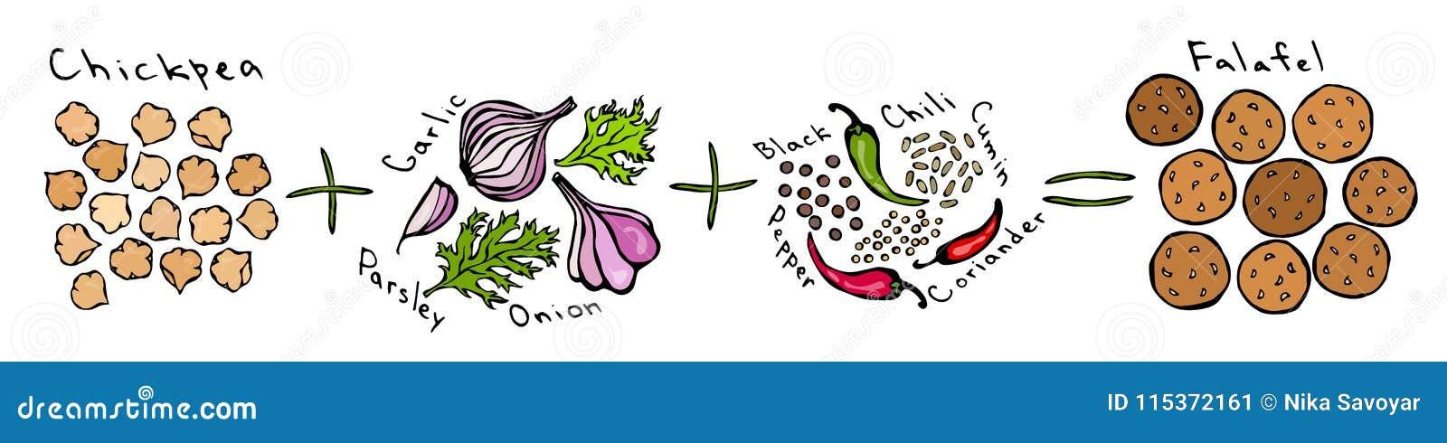 Manual da instrução de Diy do Falafel da receita Preto da salsa do alho da cebola do grão-de-bico e cominhos da pimenta, coentro