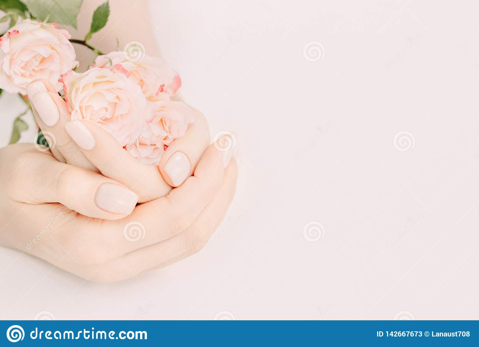 Manucure à la mode de ressort Mains femelles avec la conception de clou tenant des roses de thé sur le fond en pastel Copiez l es