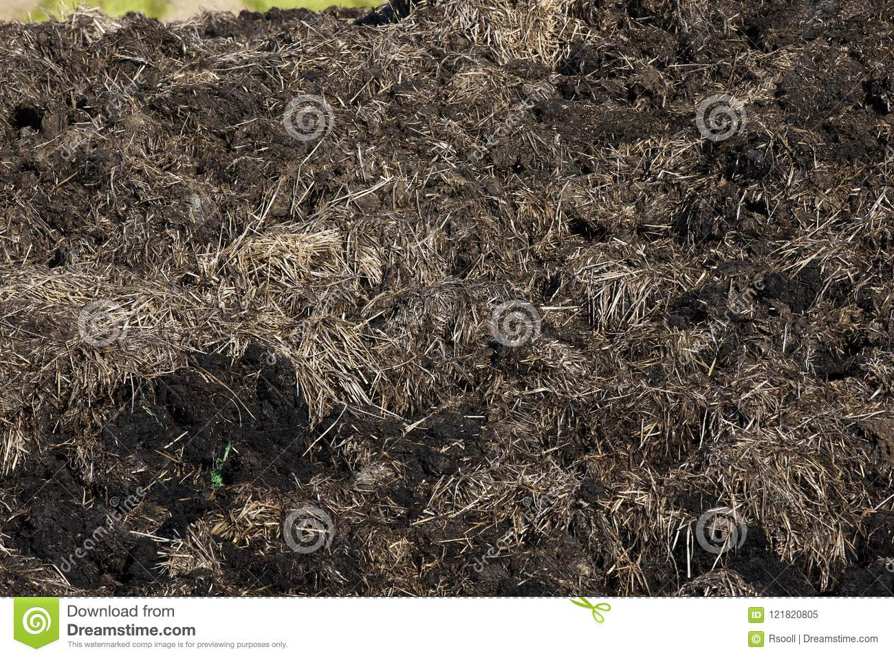 manure from cattle