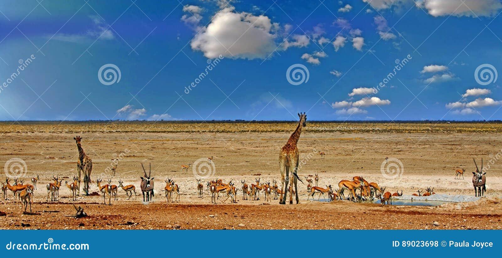 Many animals around a waterhole in Etosha with giraffe, Oryx and springbok