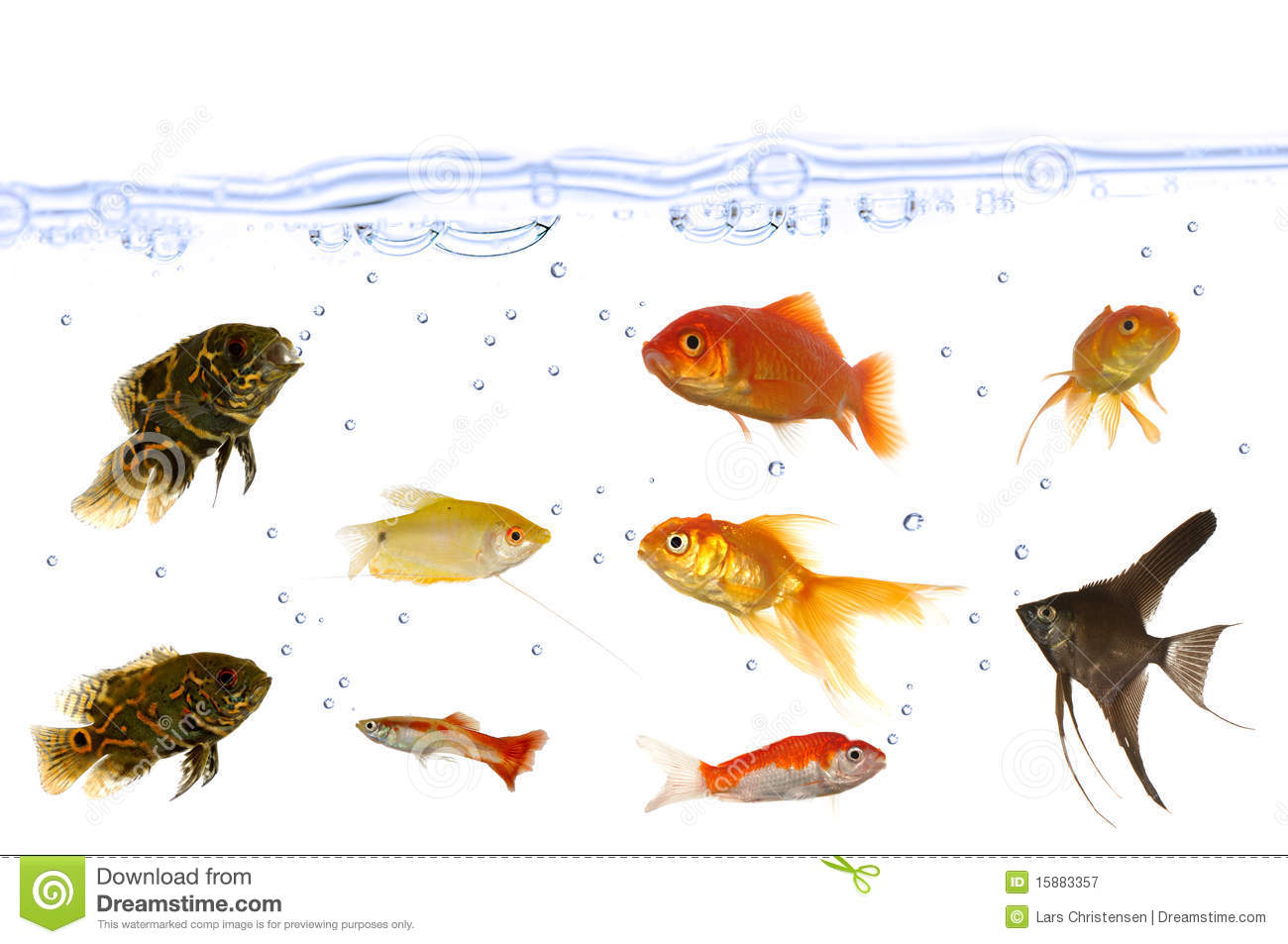 Many aquarium fish royalty free stock photography image for Can fish see water